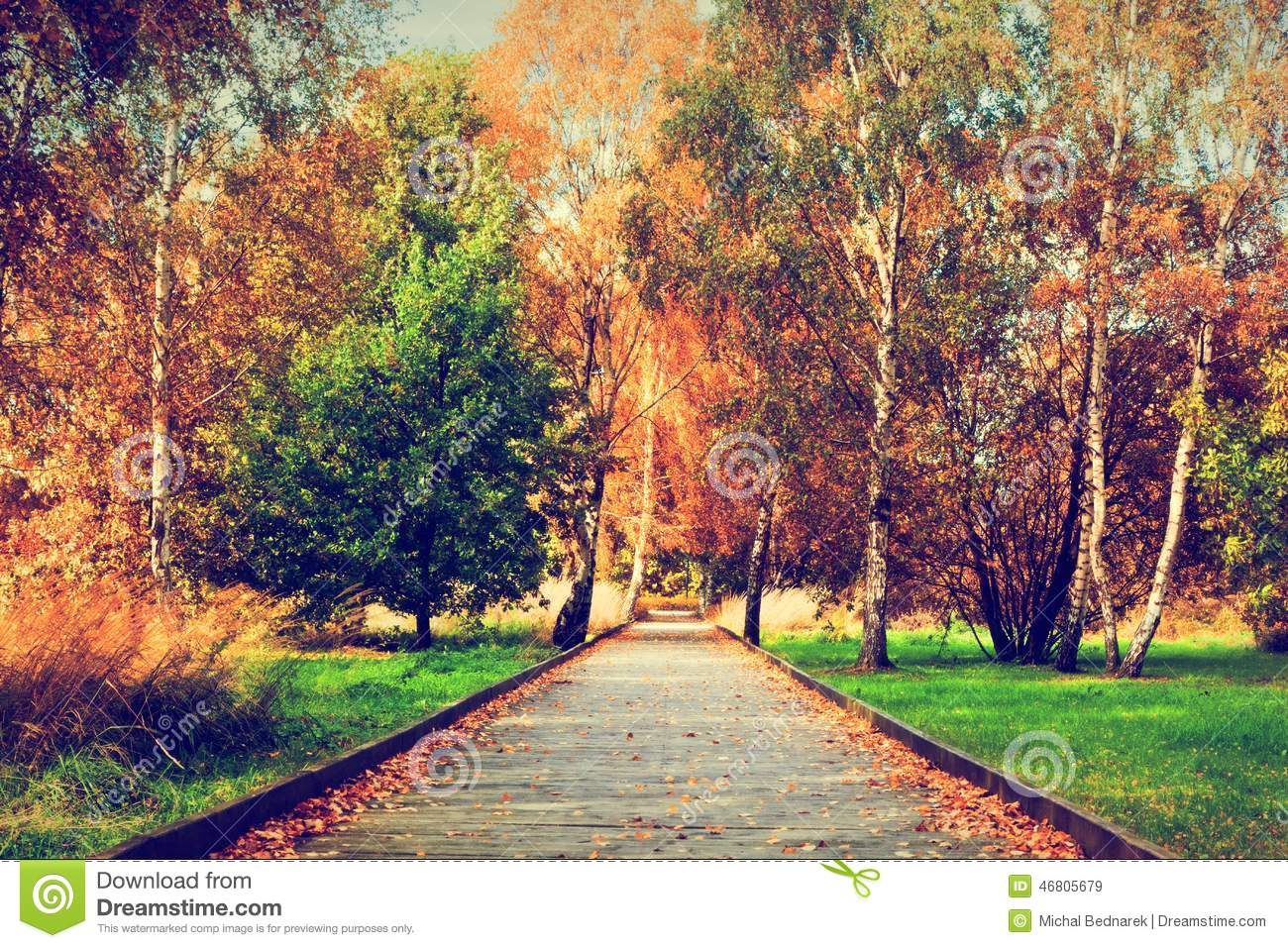 Autumn, fall park. Wooden path, colorful leaves on trees.