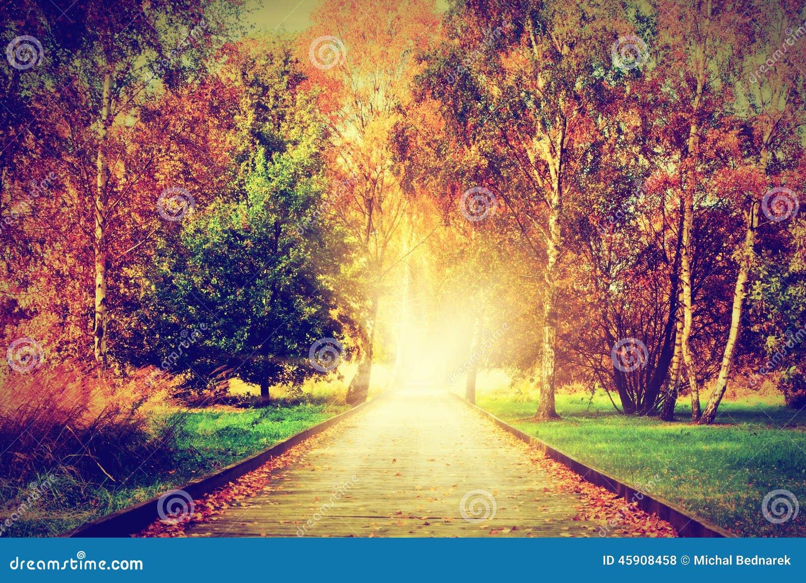 Autumn fall park wooden path towards light stock photo image