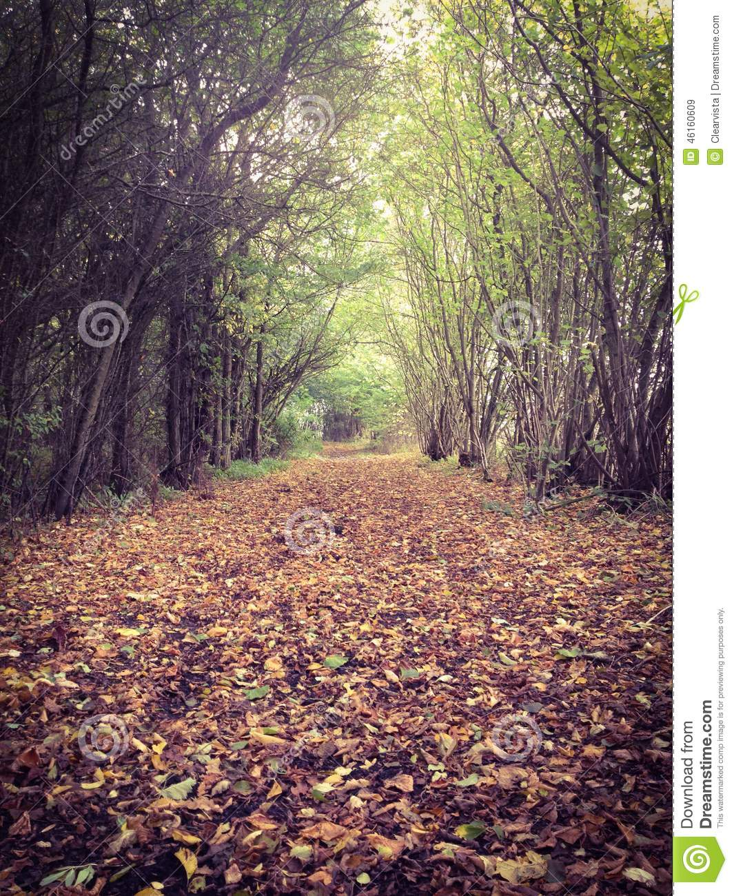 Autumn Or Fall Path Through The Forest Stock Photo