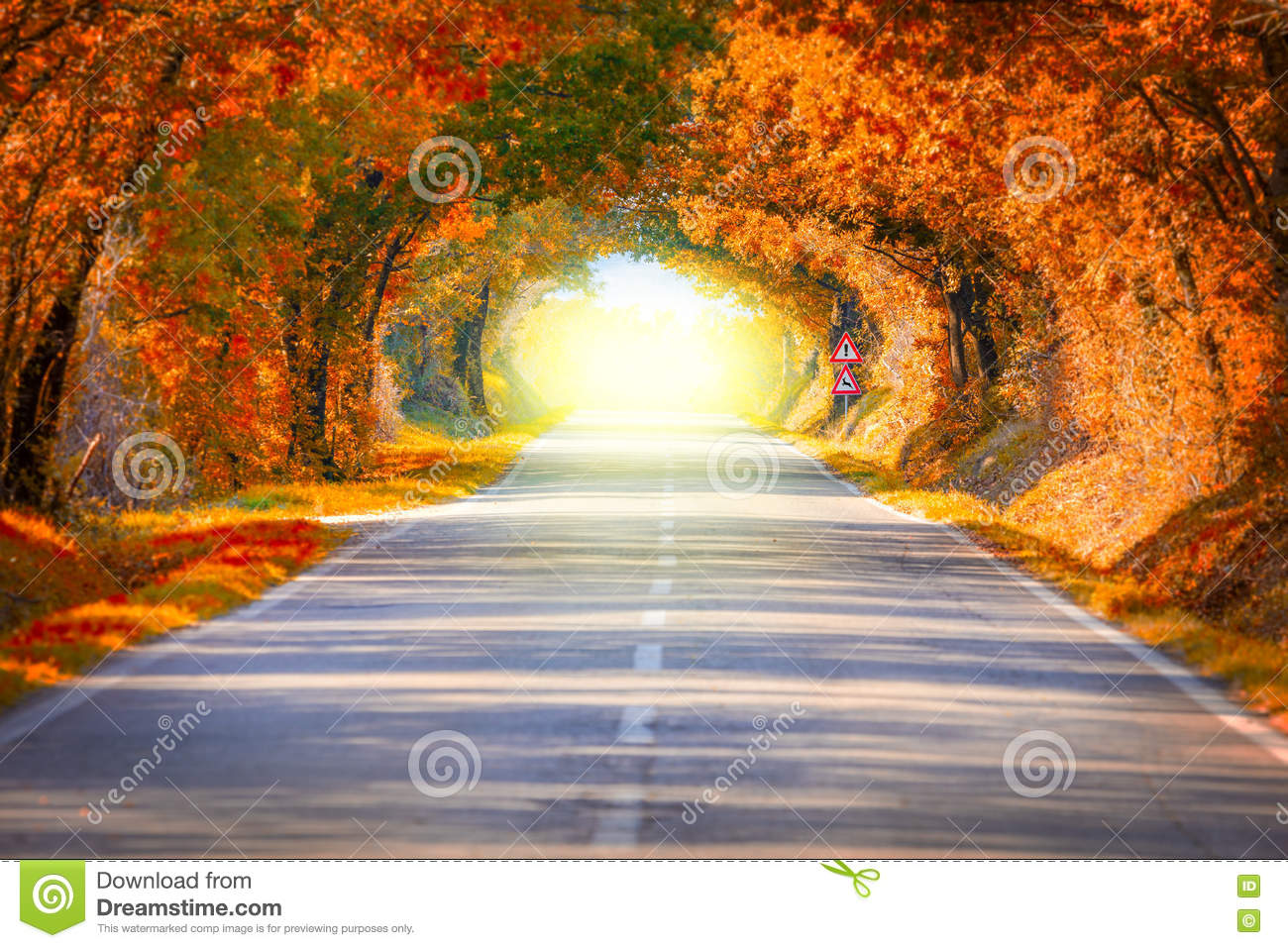 Autumn Fall Road landscape - trees tunne and magic light