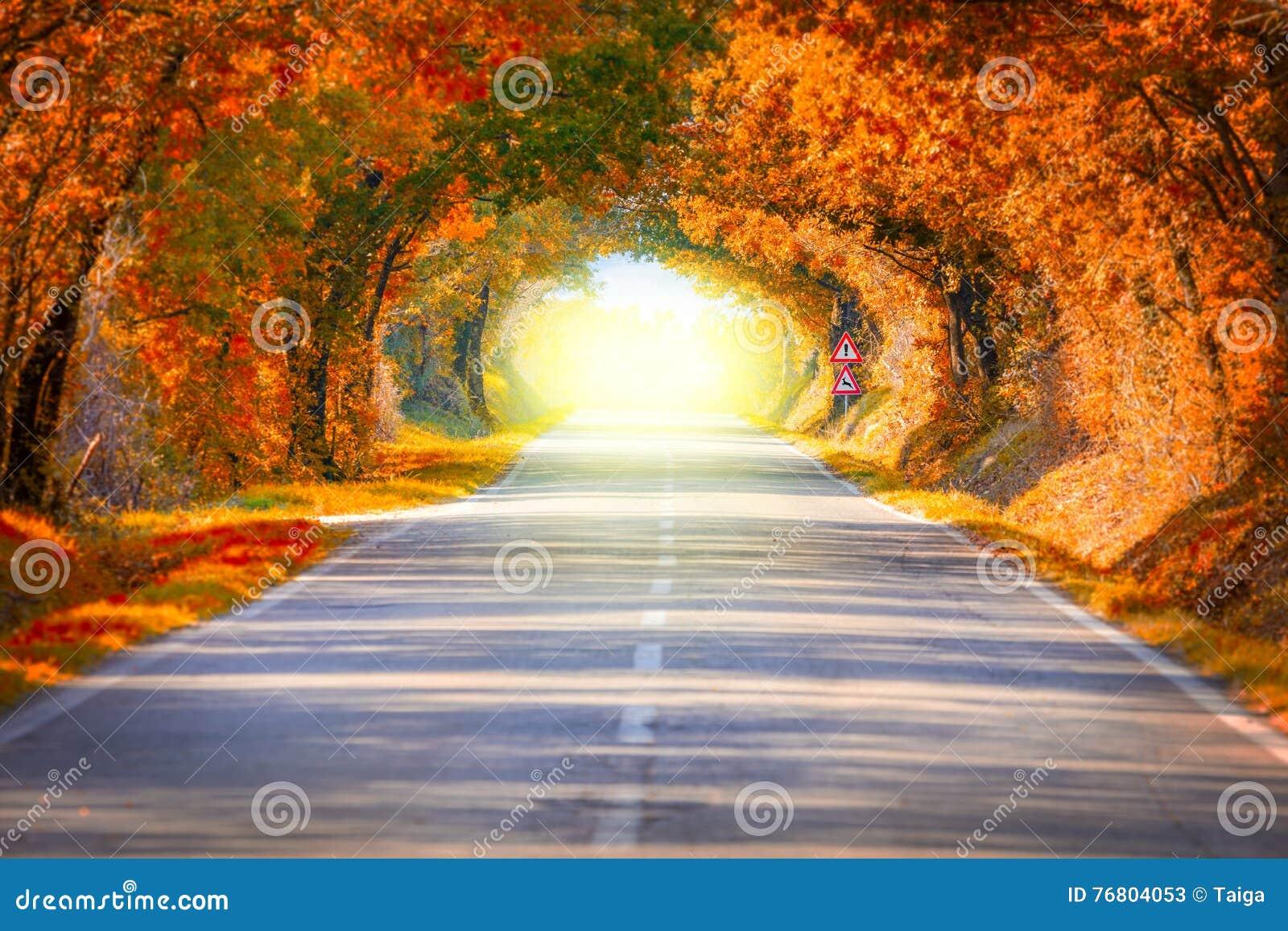Autumn Fall Road-landschap - bomen tunne en magisch licht