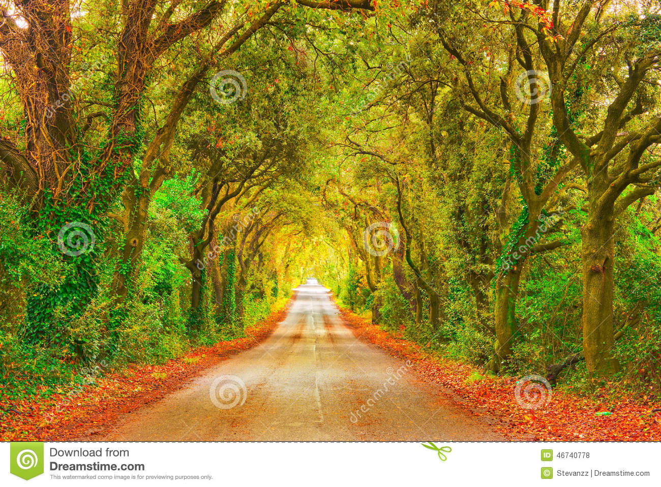 Autumn Or Fall, Tree Straight Road On Sunset. Maremma, Tuscany ... for Straight Road With Trees  143gtk