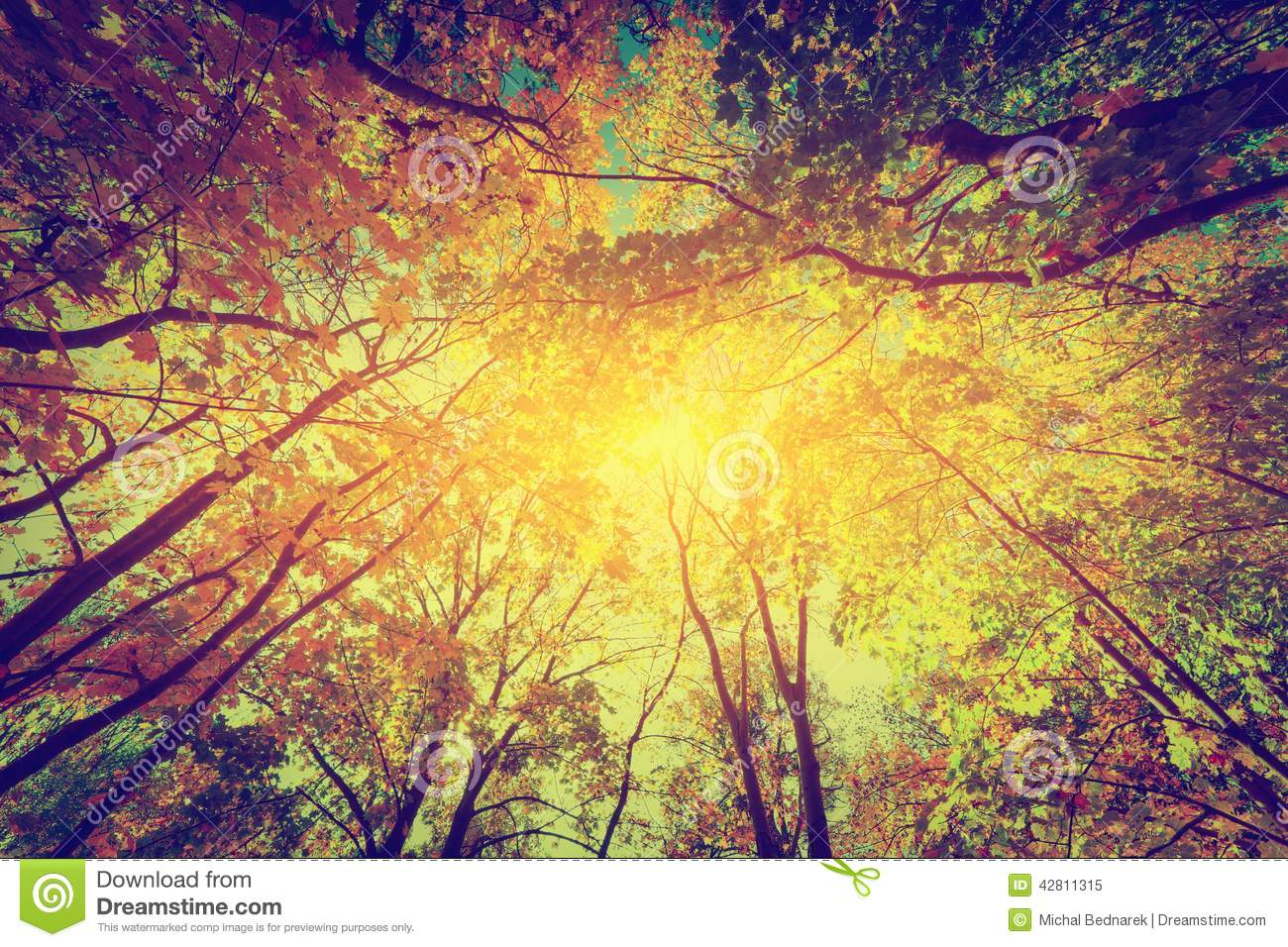 Sun Shining Through Colorful Leaves Vintage