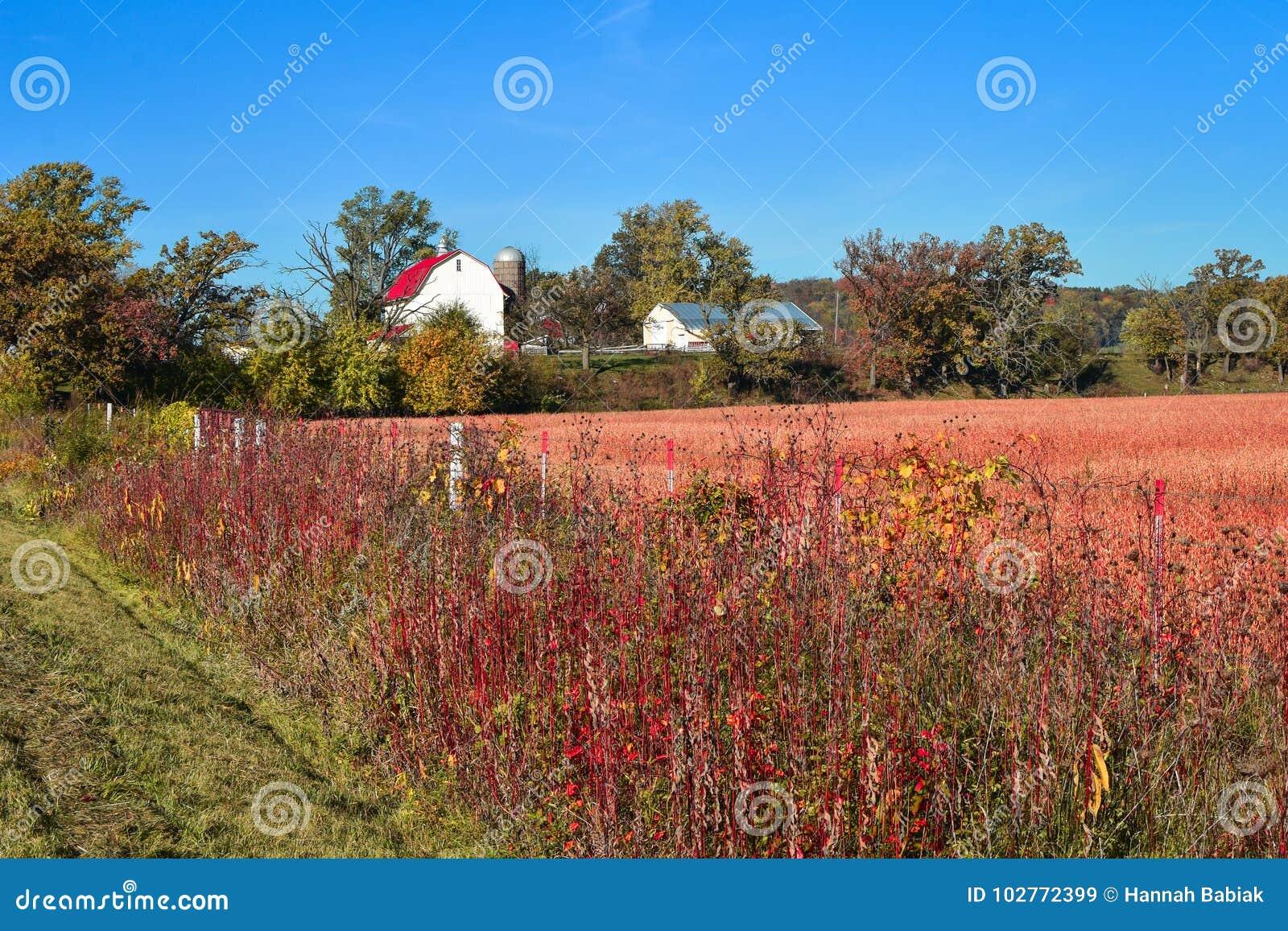Autumn Farm Scene hermoso con el granero blanco