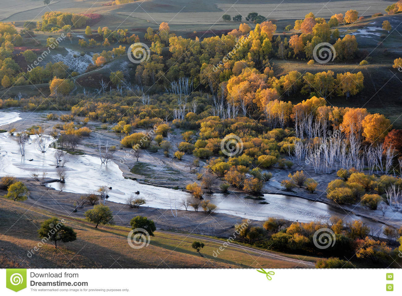 Autumn field with stream and golden birch trees