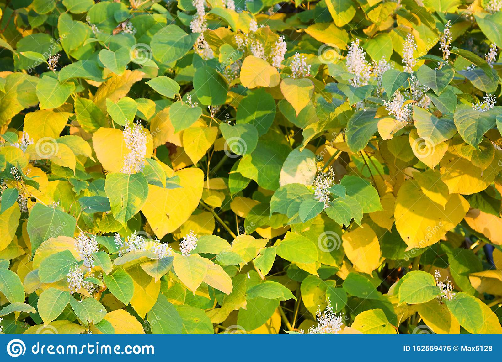 Autumn Flowering Shrubs In Autumn Period Stock Image Image Of