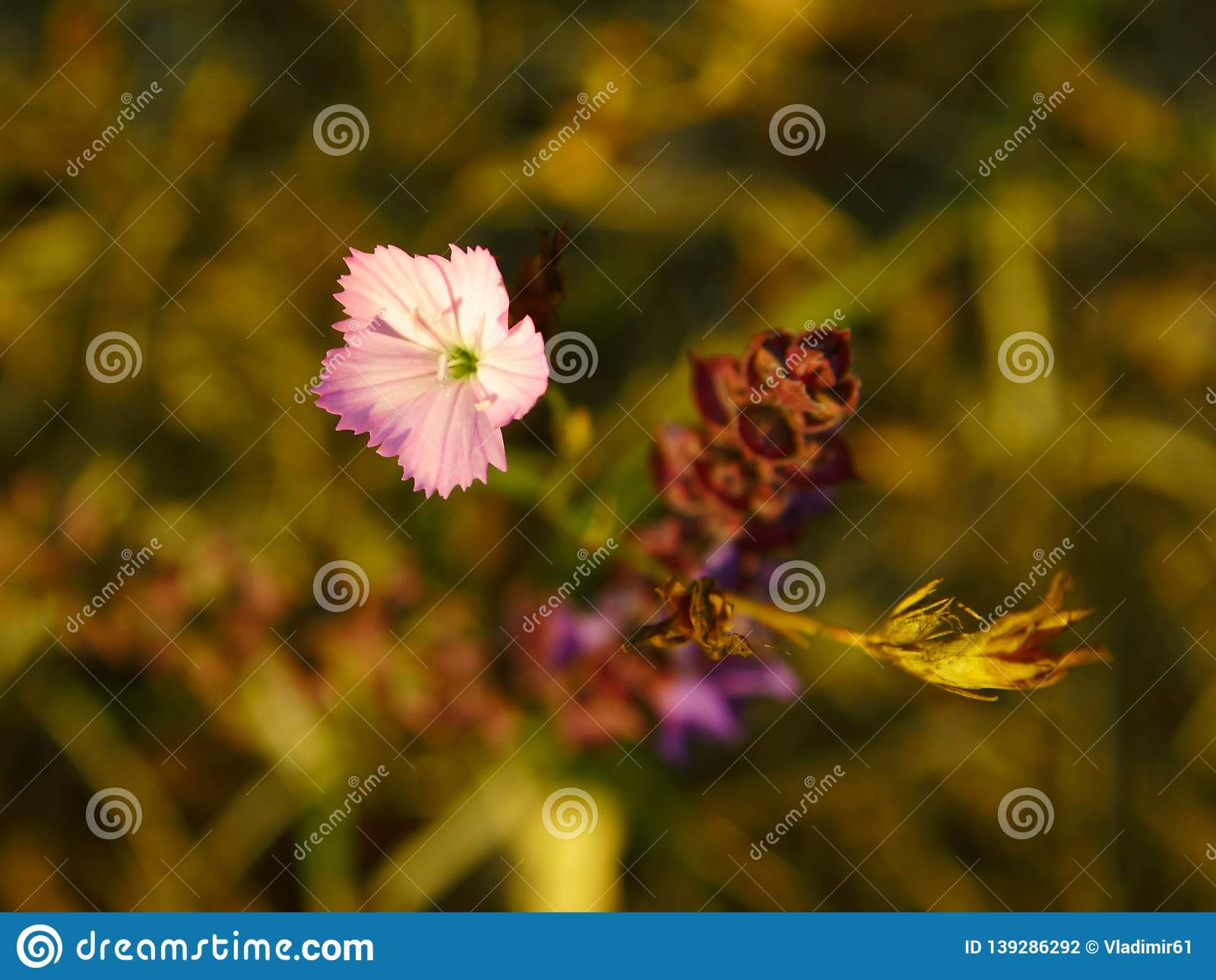 Autumn flowers in october forest