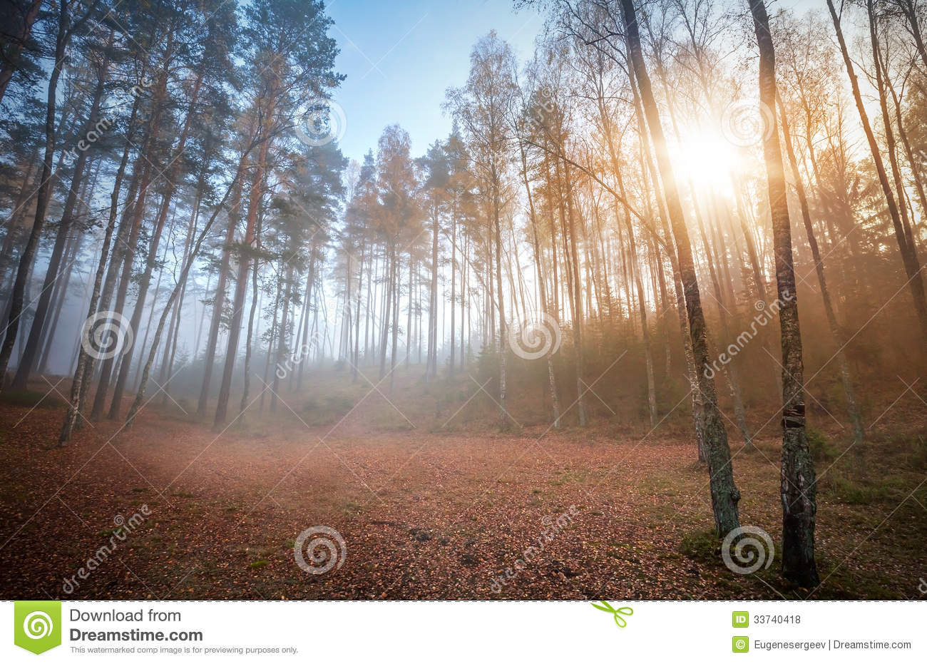 Royalty free stock photos: autumn foggy ащкуые with rising sun