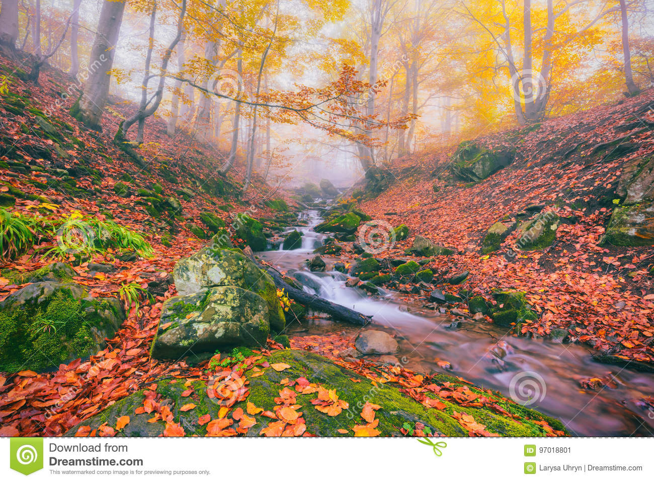 Autumn Foggy Forest Stream In The Mountain Canyon Stock
