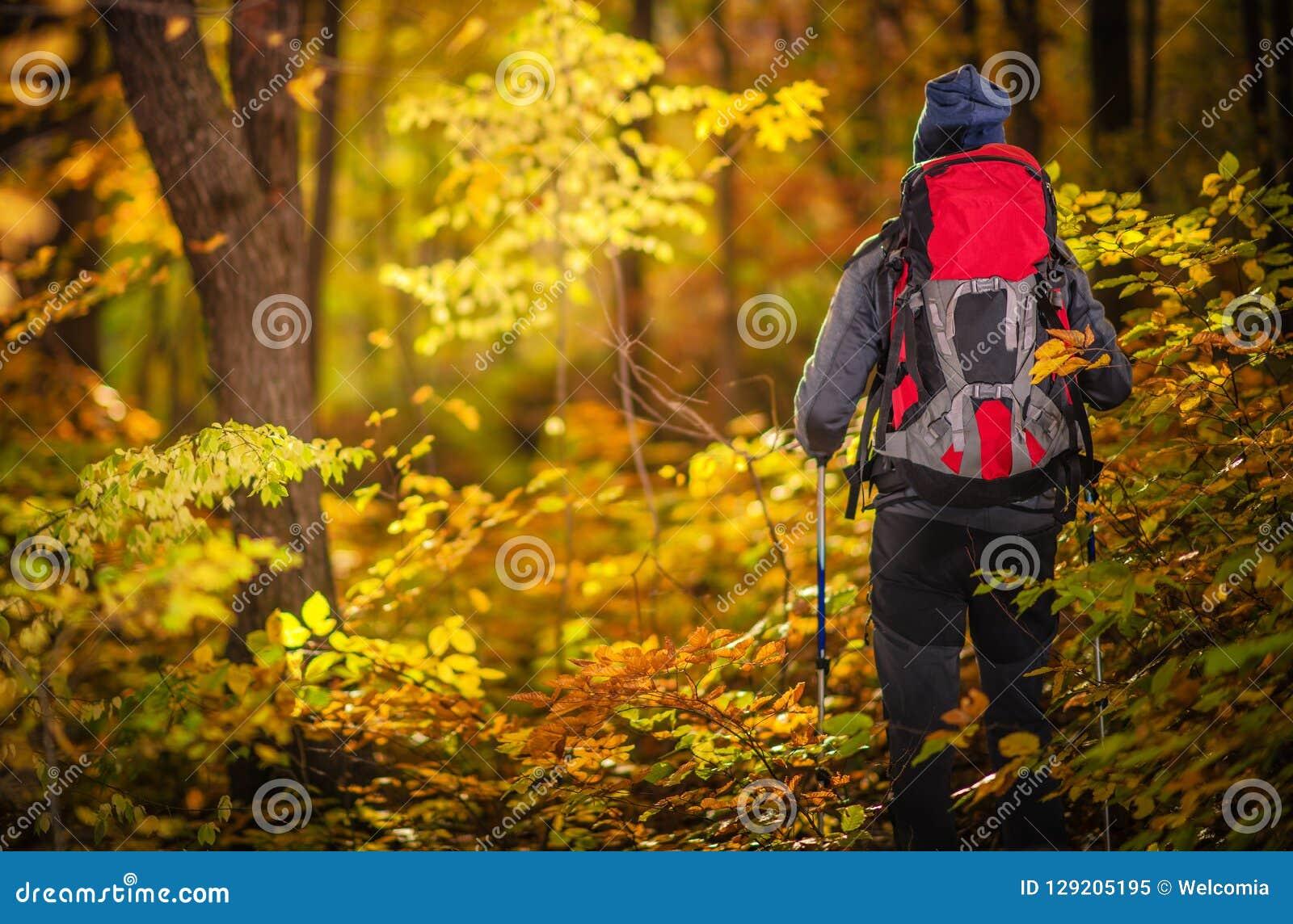Autumn Foliage Exploring
