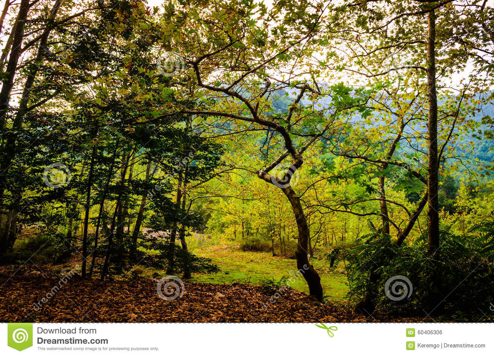 Autumn Forest Of Aegean Region
