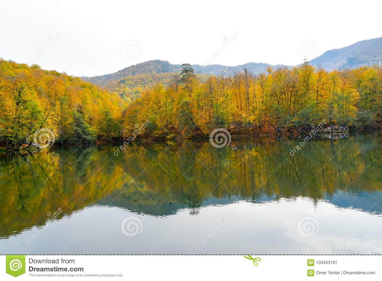 Autumn, forest, colorful leaves and waterfall, stream, lake views
