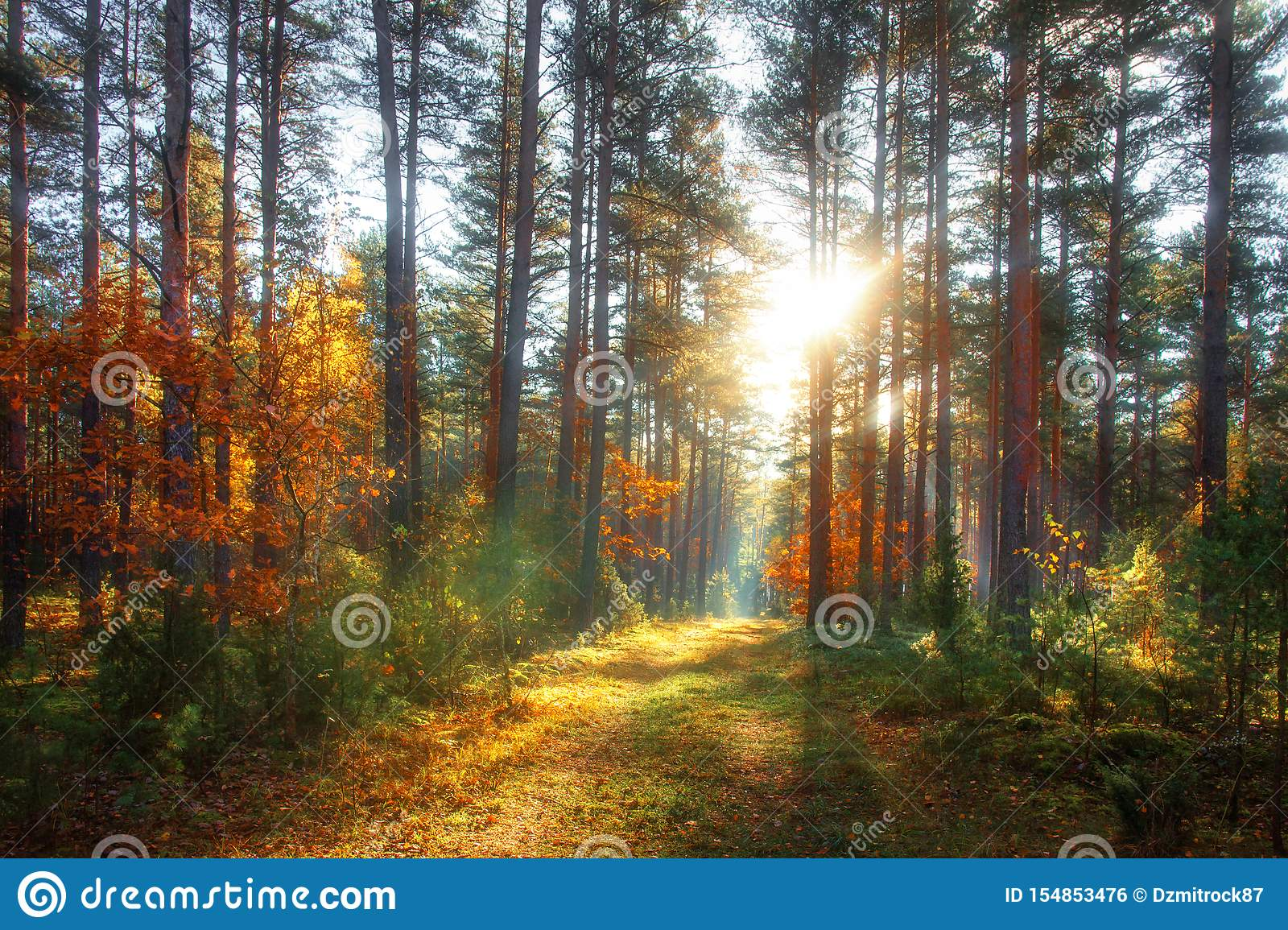 Autumn forest. Colorful nature landscape in sunny october day