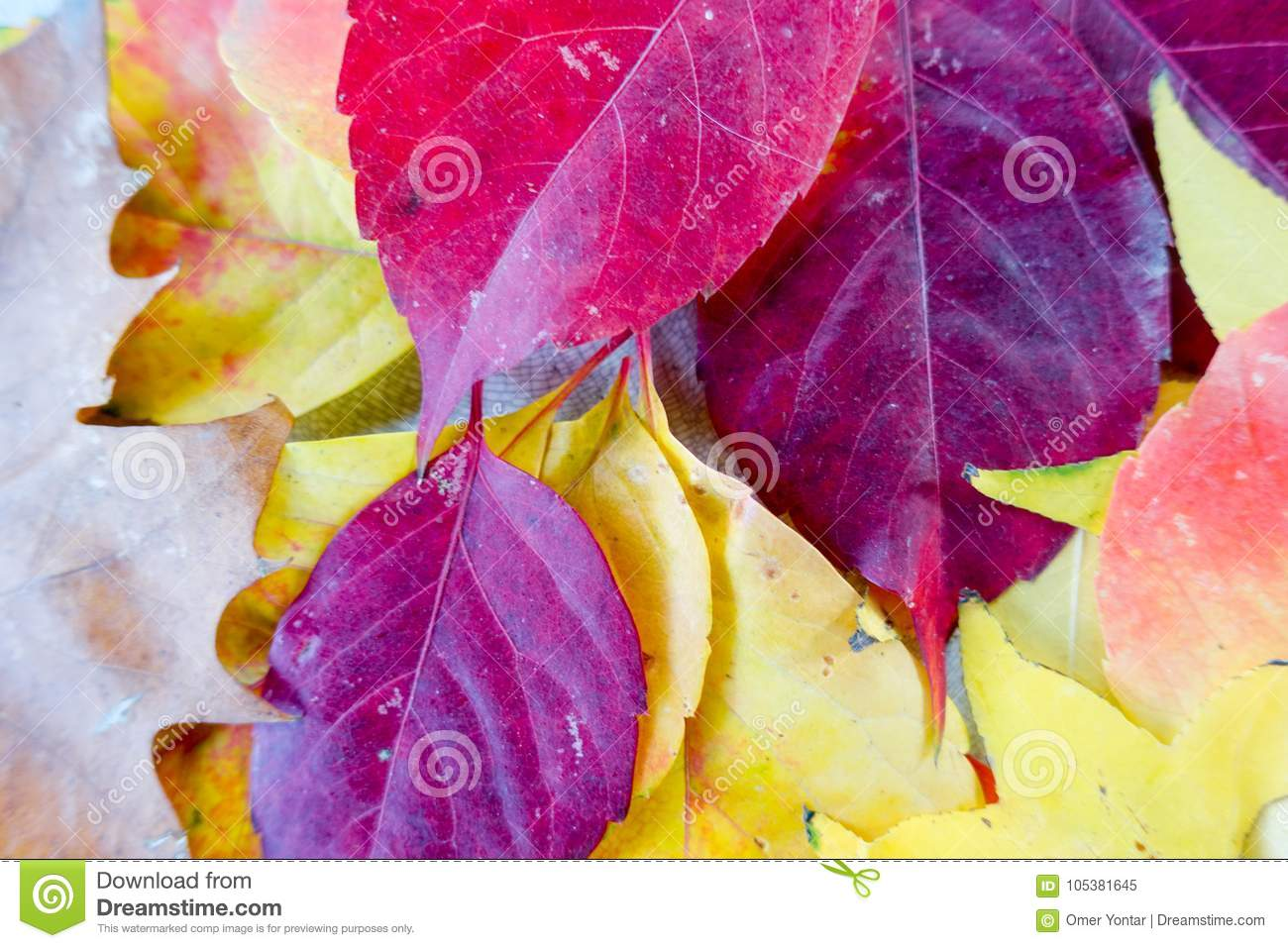 Autumn and forest, colorful trees and leaves