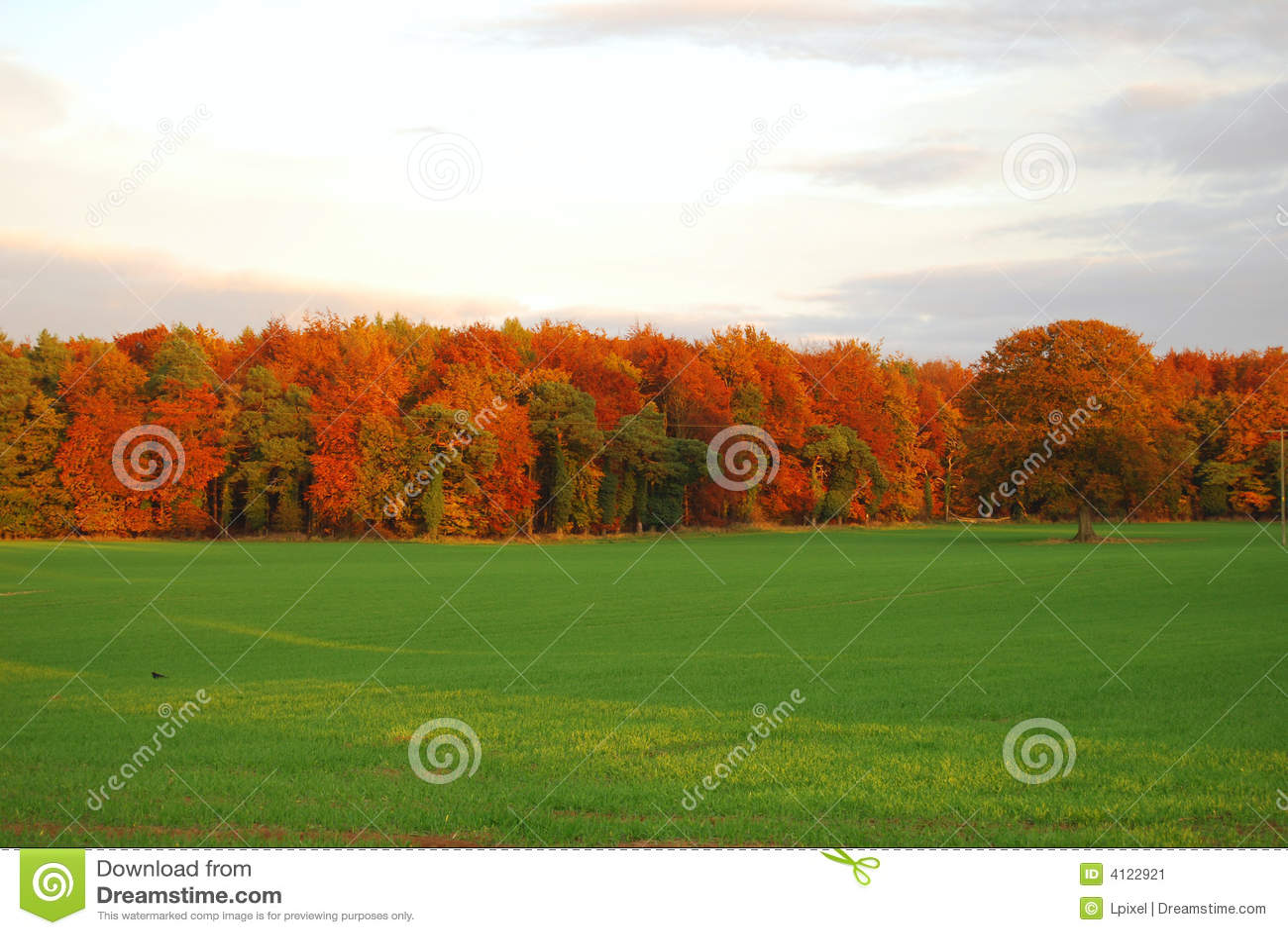 Autumn forest edge