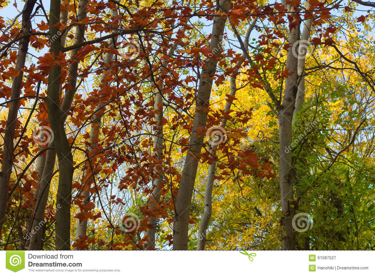 autumn leaf tree forest - photo #20