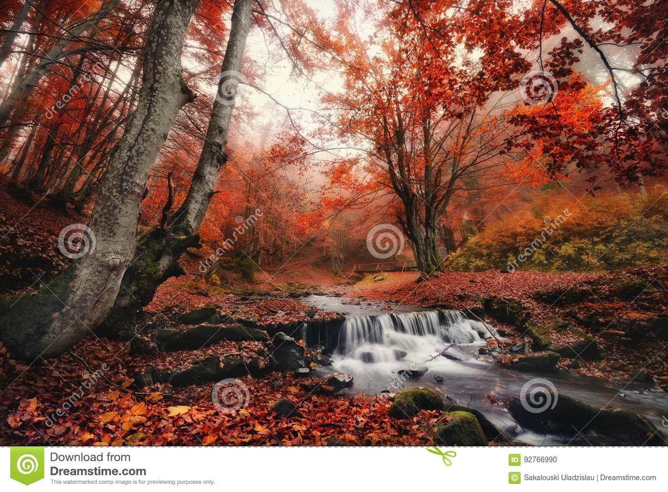 Autumn Forest Landscape With Beautiful Creek e piccolo ponte Foglie incantate di rosso di Autumn Foggy Beech Forest With ed insen
