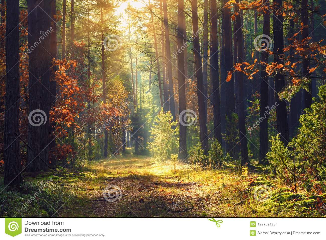 Autumn forest landscape. Colorful foliage on trees and grass shining on sunbeams. Amazing woodland. Scenery fall
