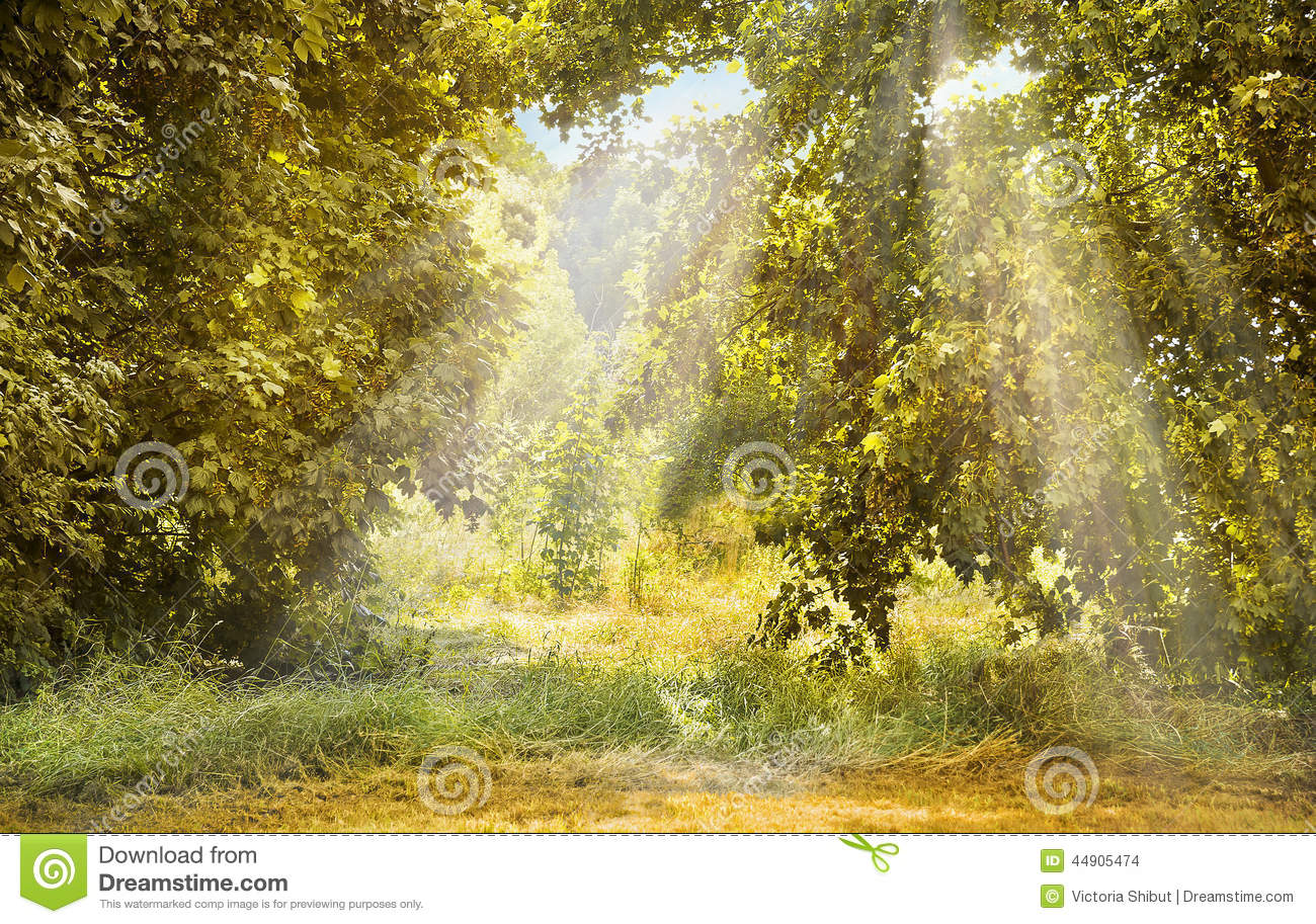 Autumn forest landscape with sun rays