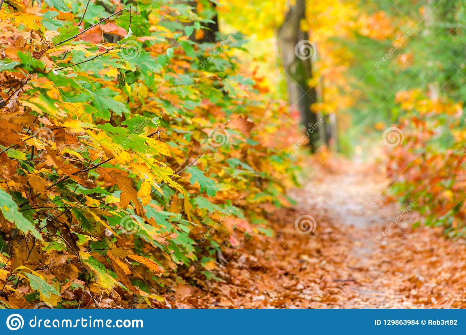 Autumn forest nature background. Autumn, fall forest. Path of red leaves towards light