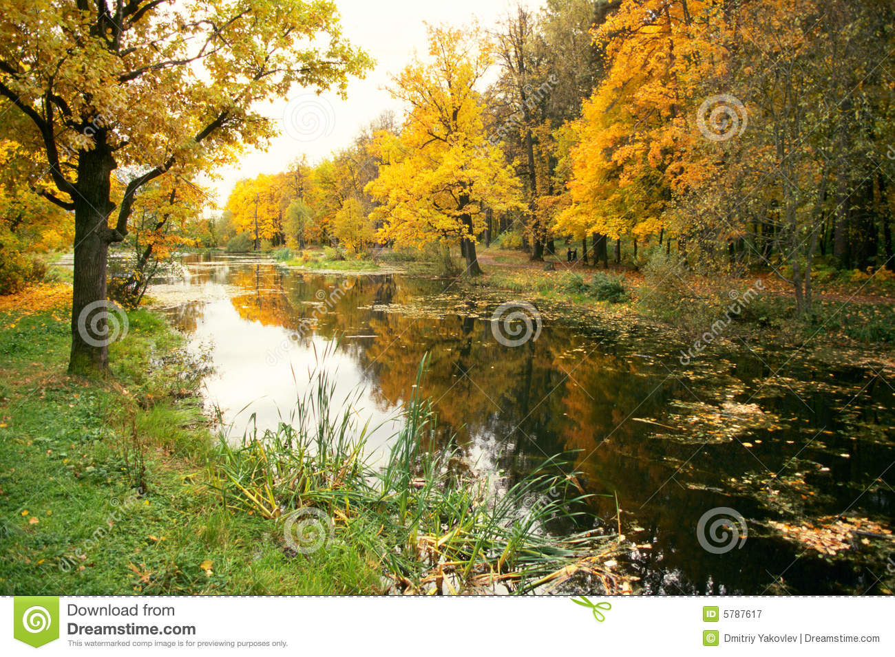 Autumn Forest And The Pond Royalty Free Stock Photography