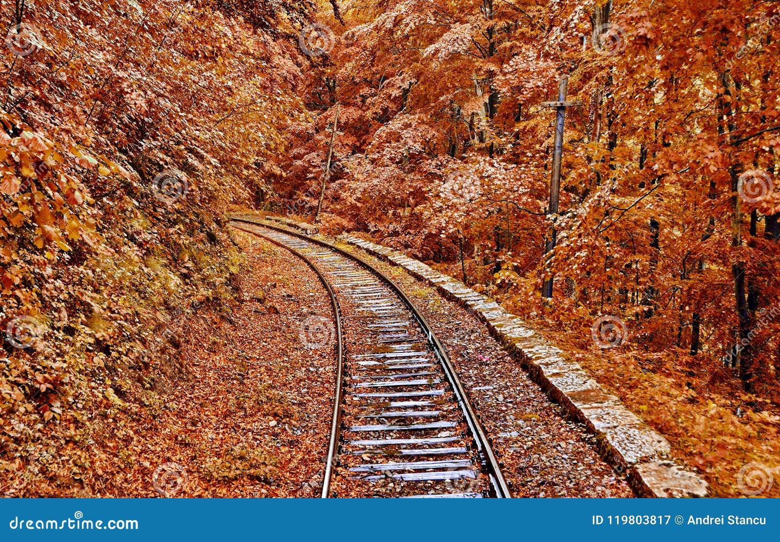 Autumn Forest Railroad
