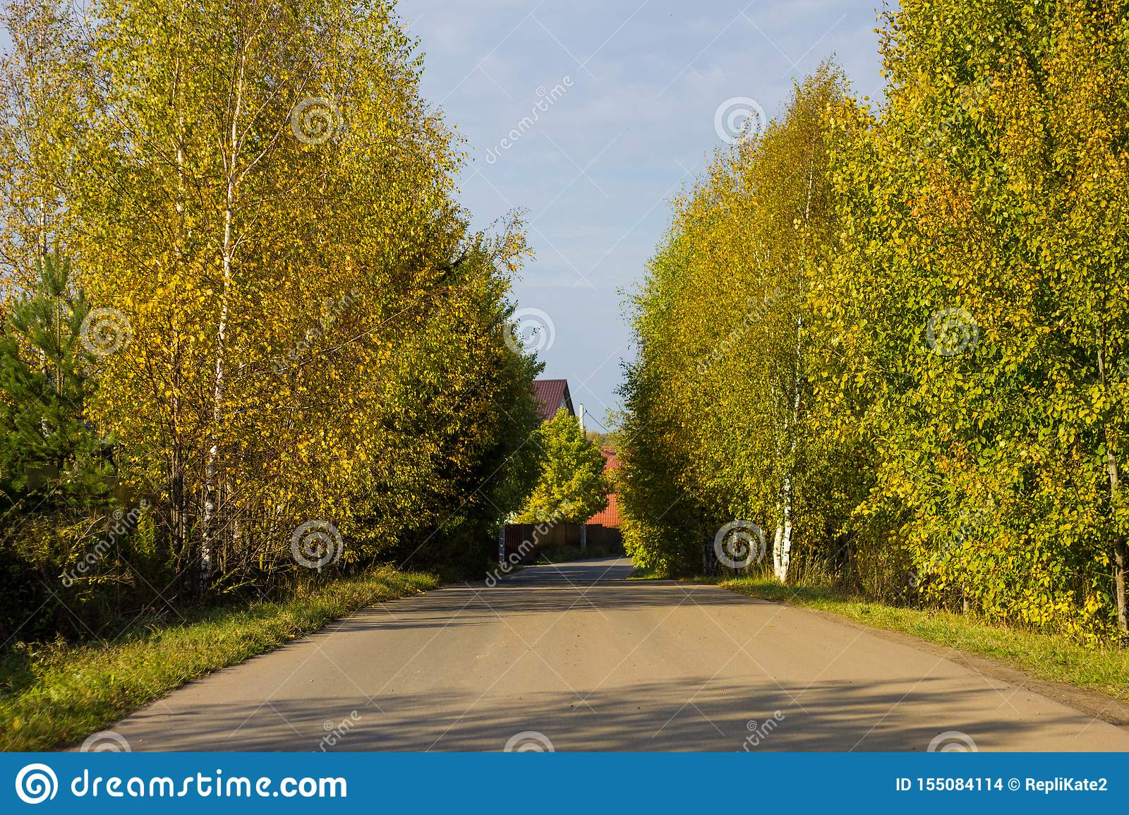 Autumn forest road with colorful yellow and orange trees against a clear sky on a Sunny day. Colorful landscape of Russian nature