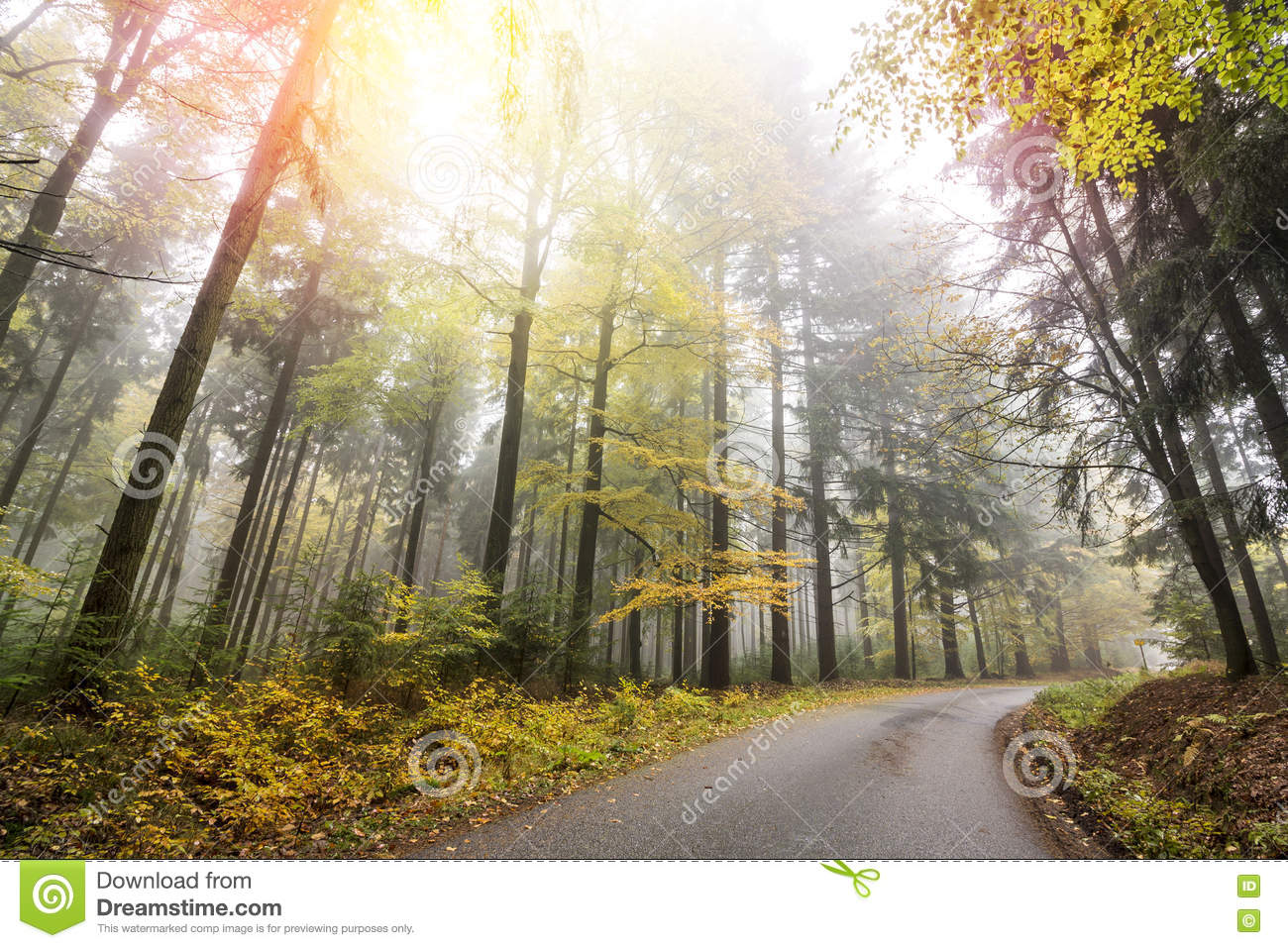 Autumn Forest with Road