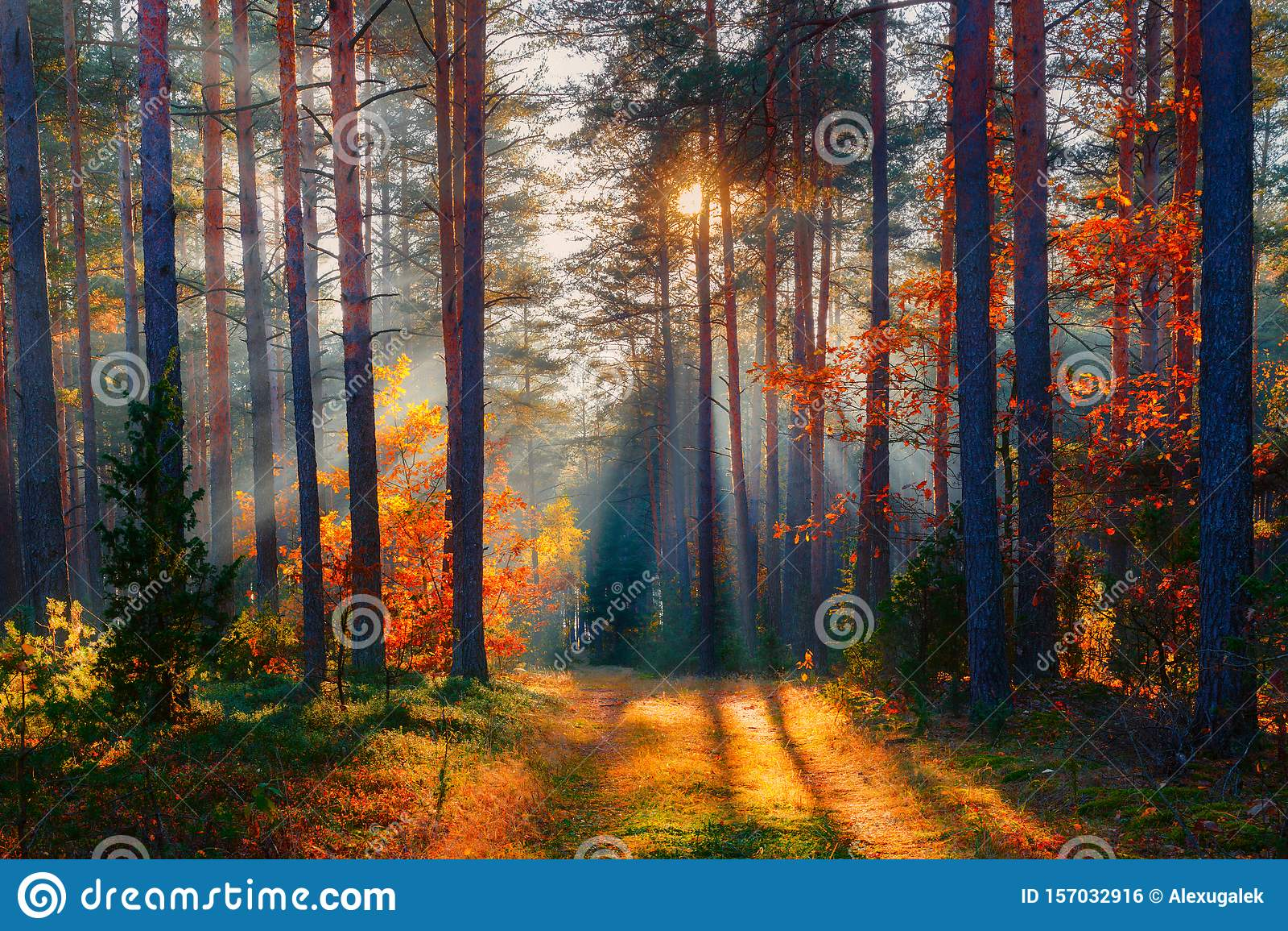 Autumn forest scene