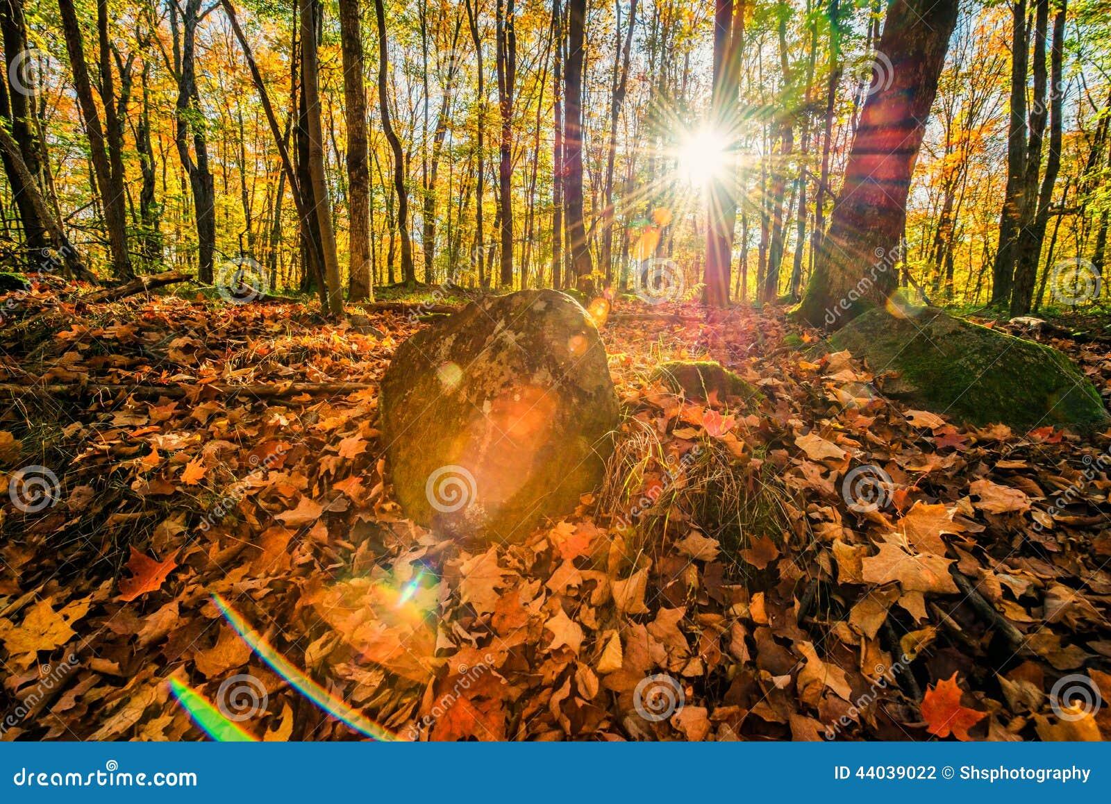 Autumn Forest Solar Flare