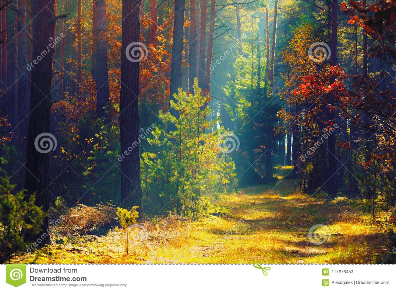 Autumn forest. Sunny autumn nature. Path in colorful forest with