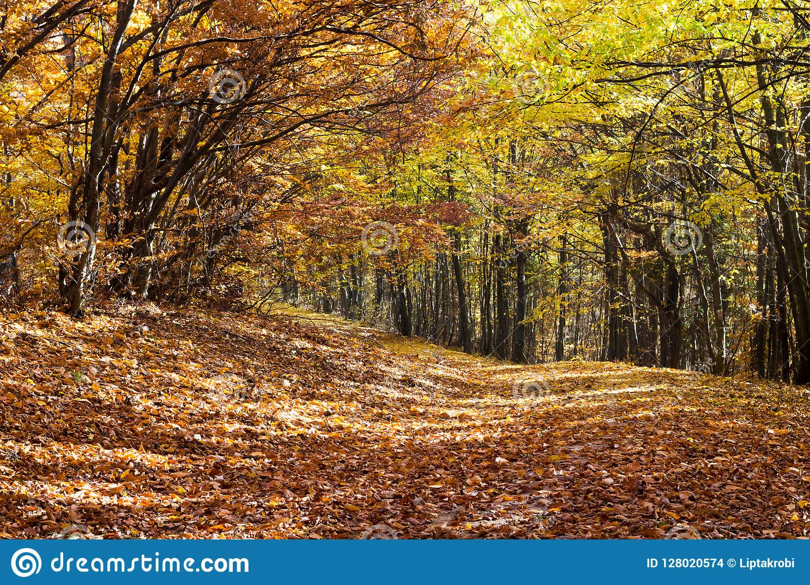 Autumn forest, trees and the leaves were falling