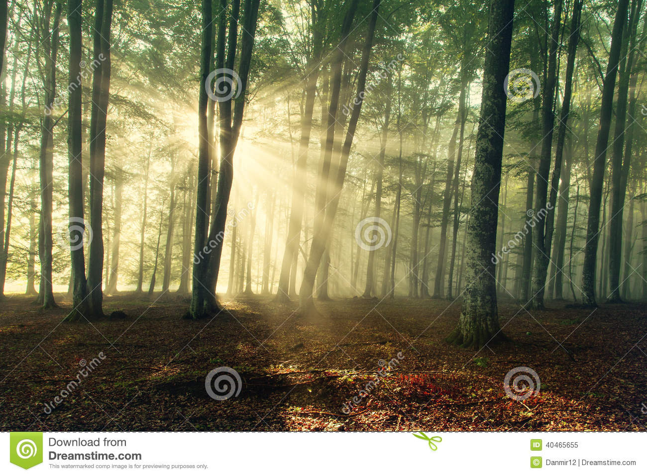 Autumn forest trees. nature green wood sunlight backgrounds.