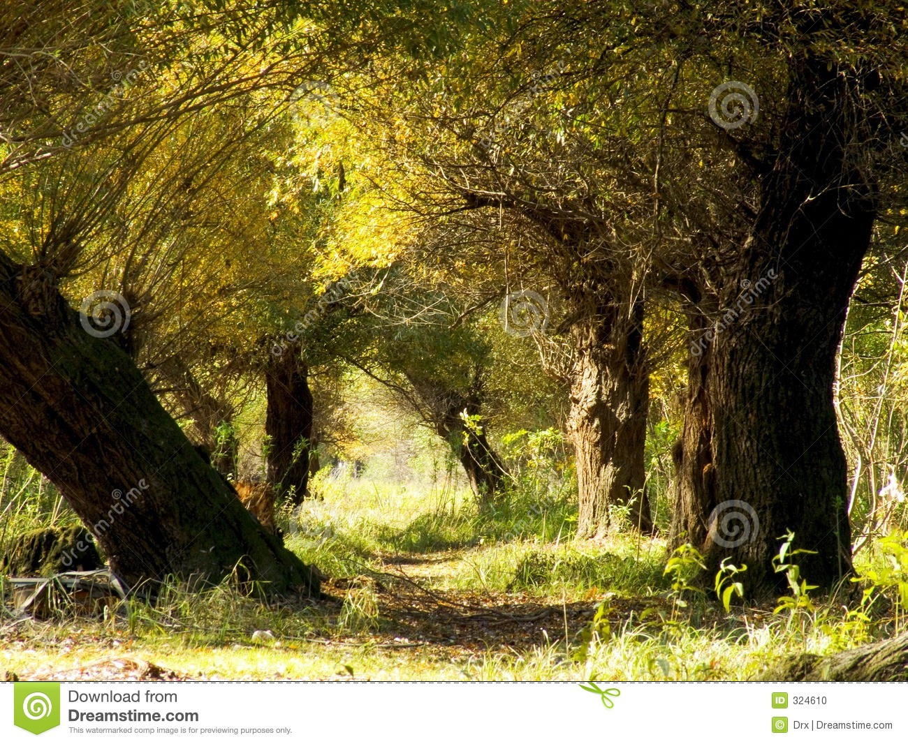 autumn forest tunnel stock photo image 324610