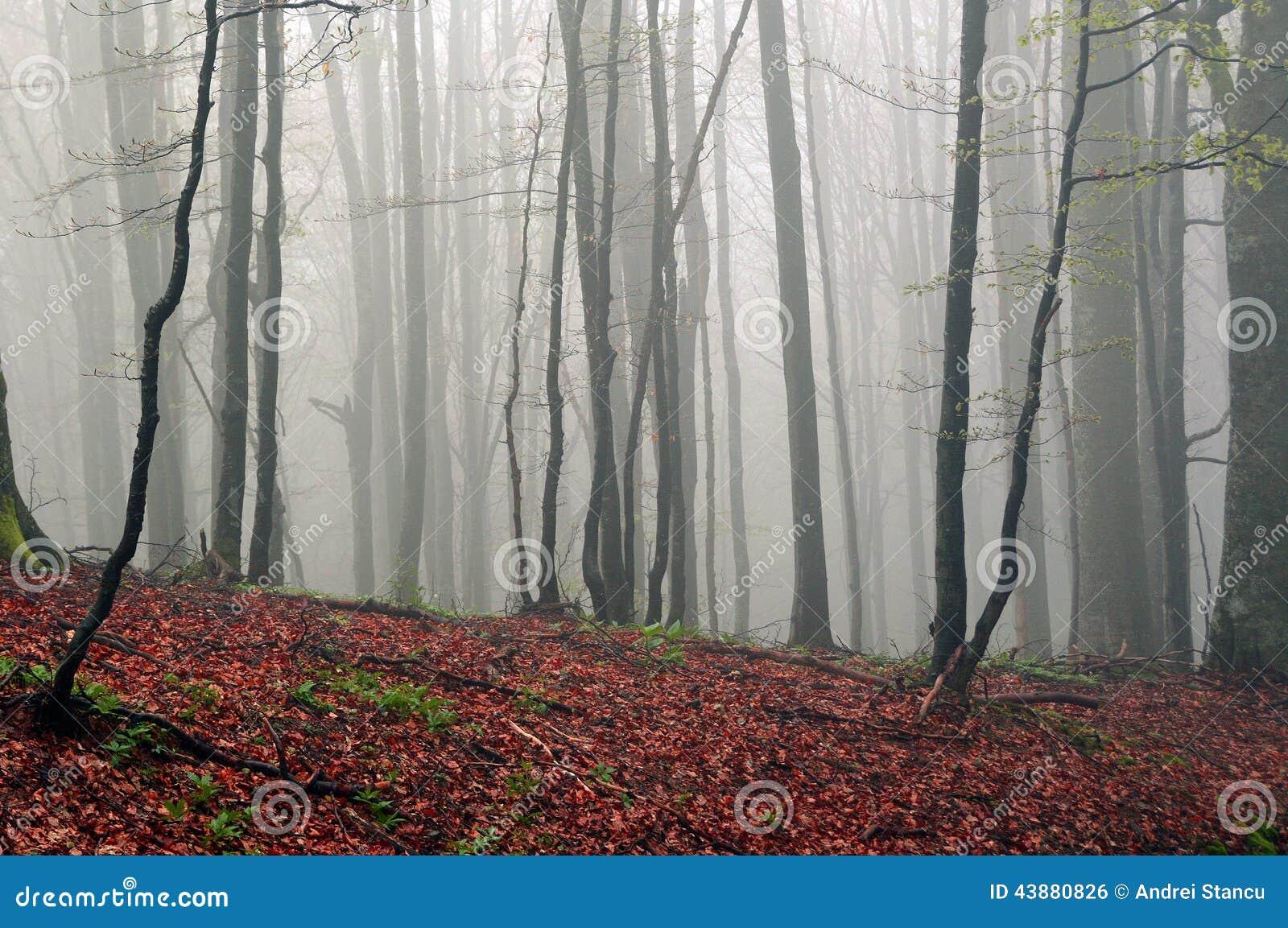 Autumn Forrest nevoento
