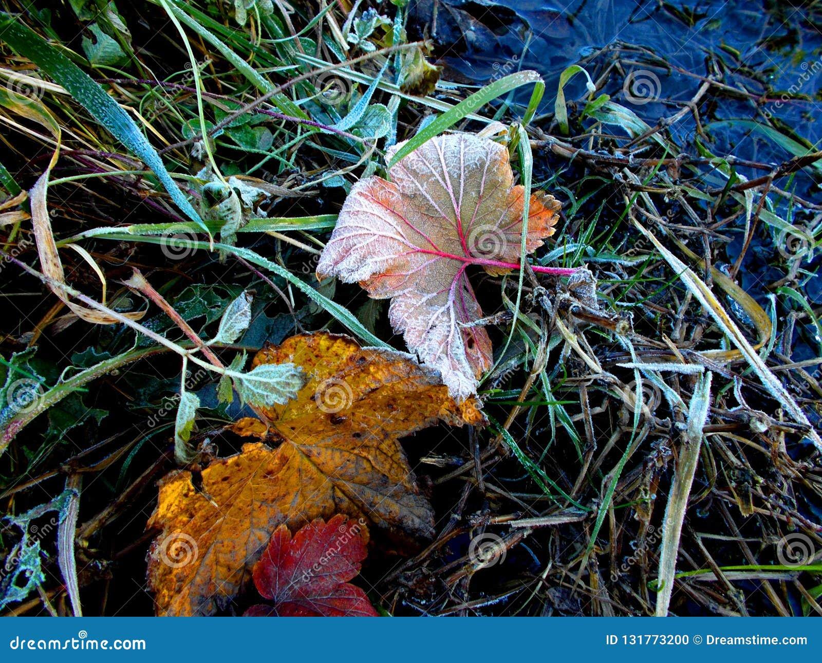 Leaves Of Grass Stream