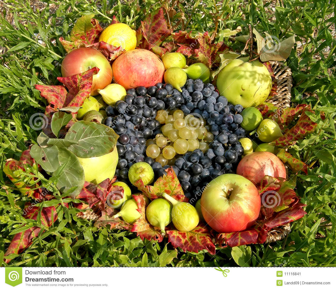 Autumn Fruit Basket Stock Image - Image: 11116841