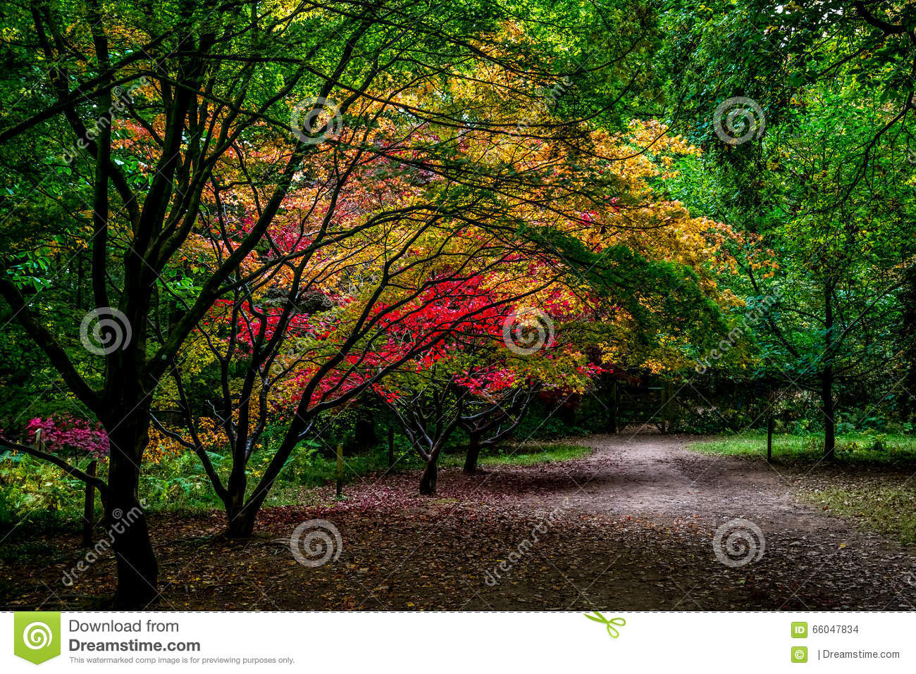 Autumn Gardens Pathway, Queenswood, Herefordshire Stock Photo ...