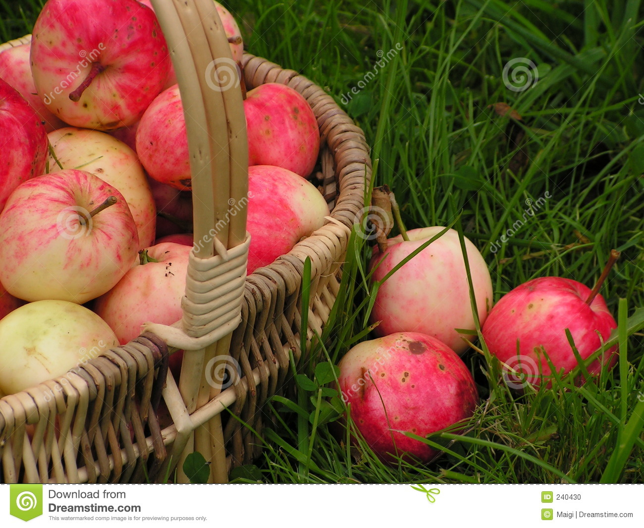 Download Autumn gifts 4 stock photo. Image of beneficial, green - 240430