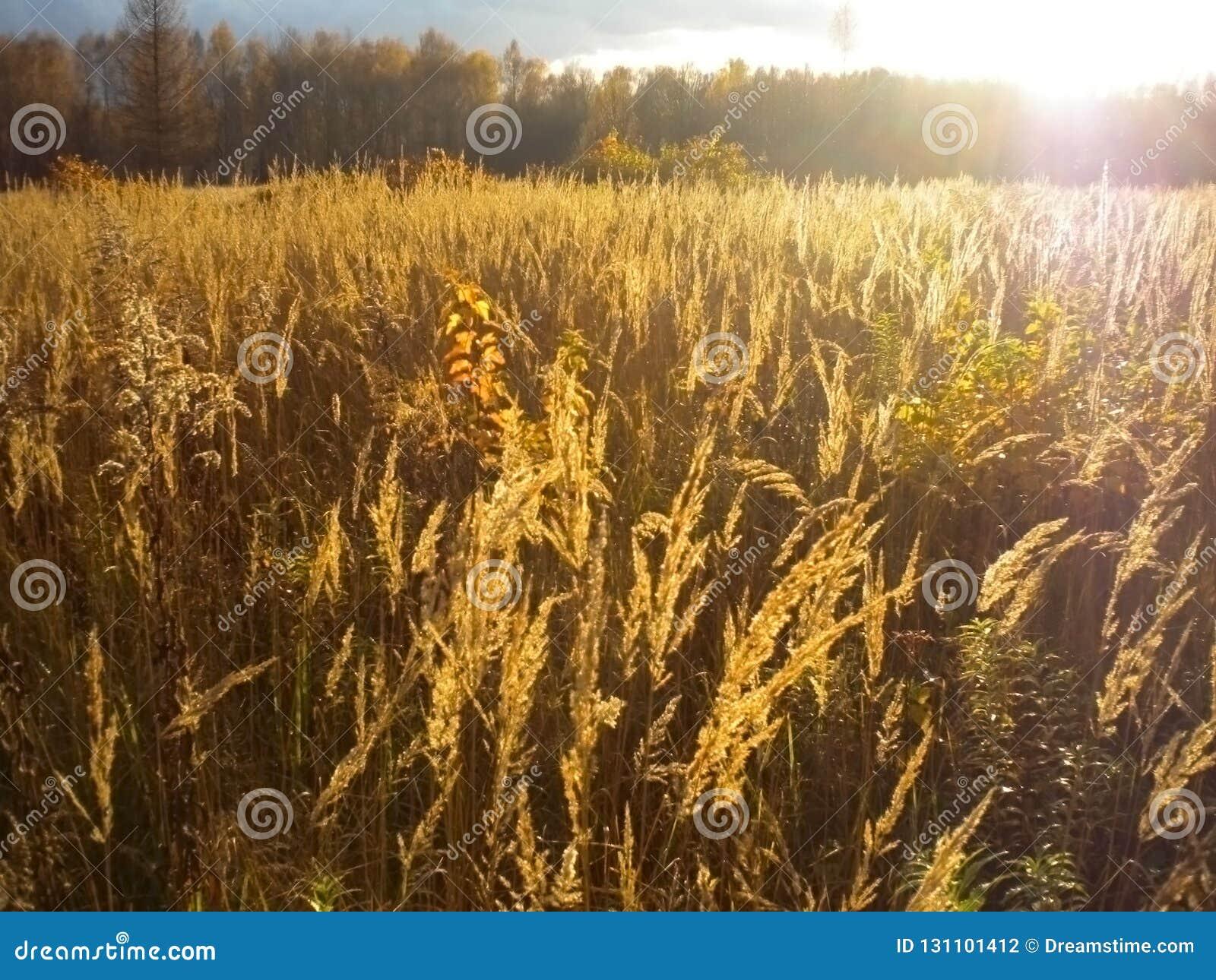 Autumn, Golden field, bright sun