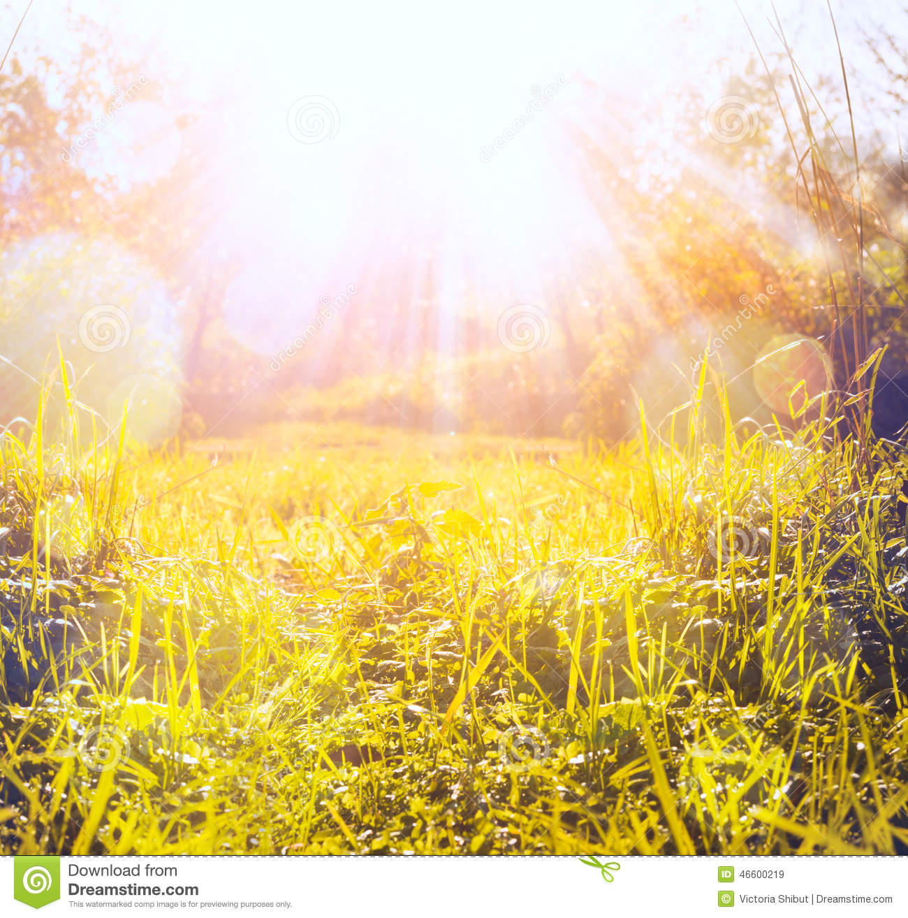 Autumn Grass With Sun Beam And Bokeh,nature Background