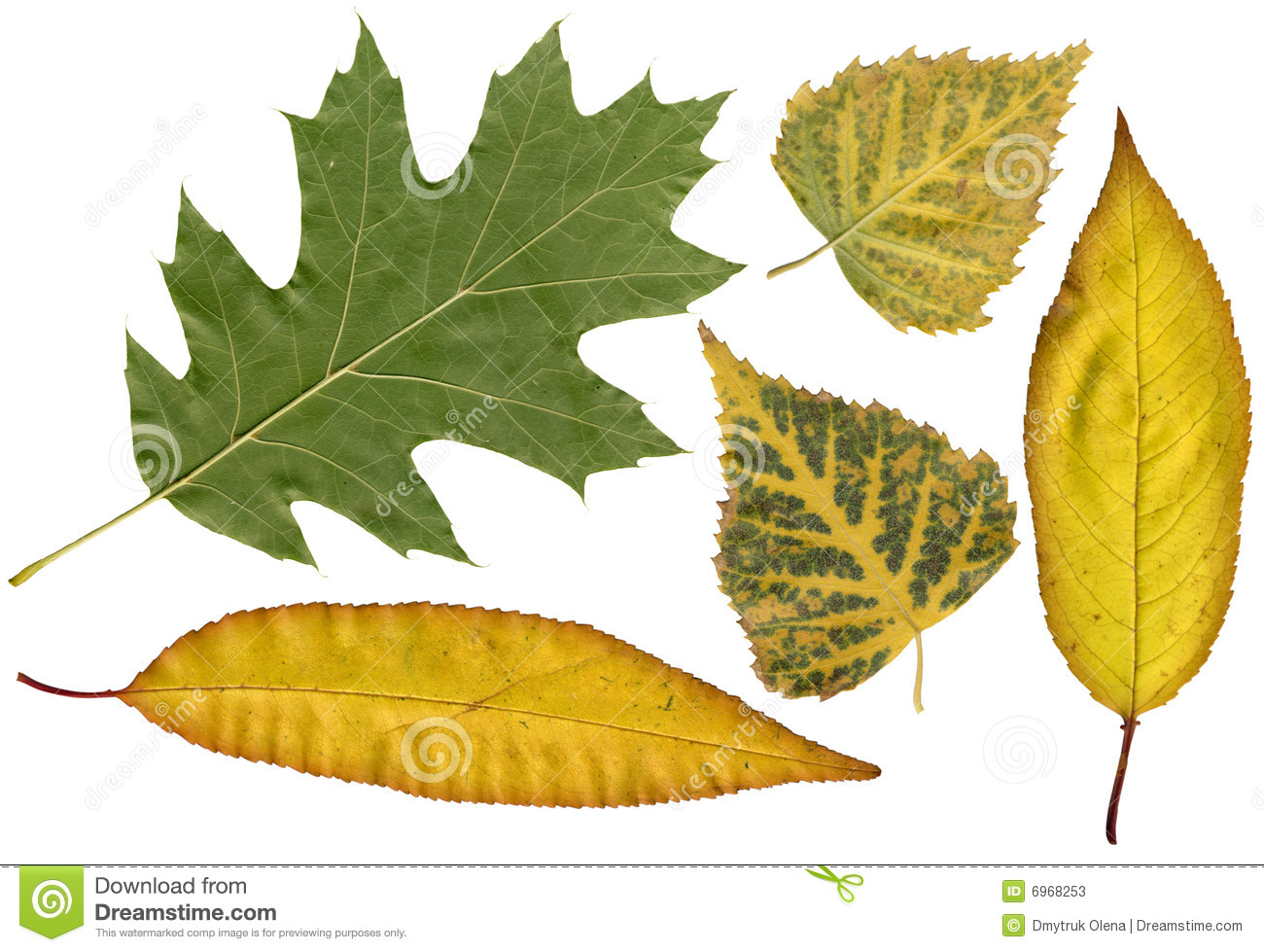 Autumn herbarium stock photos image 6968253 - Model herbarium ...