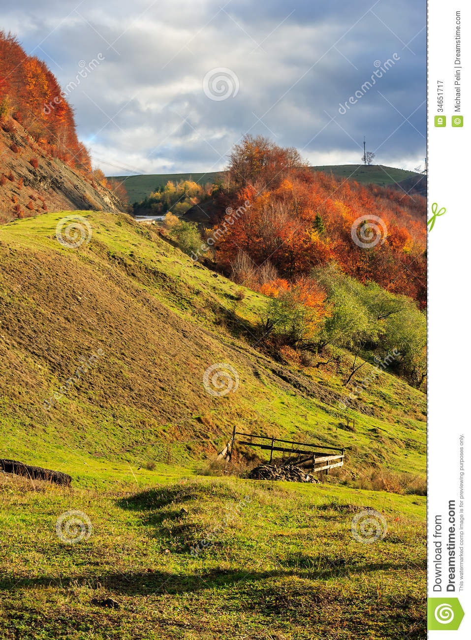 Autumn hillside with pine and colorful foliage aspen trees for Nearby landscapers
