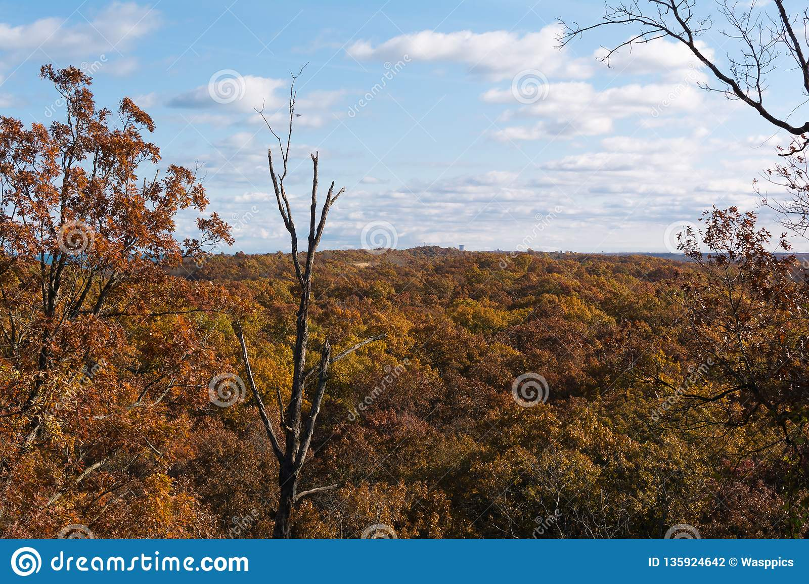 Autumn in Indiana Dunes State Park.