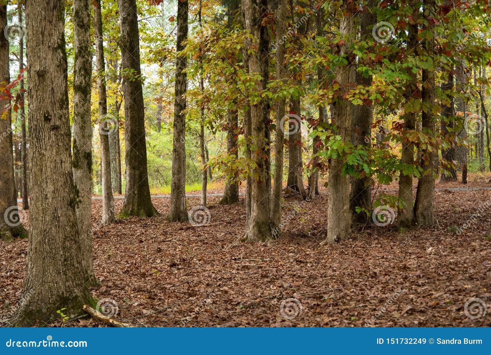 Autumn kolor lasu