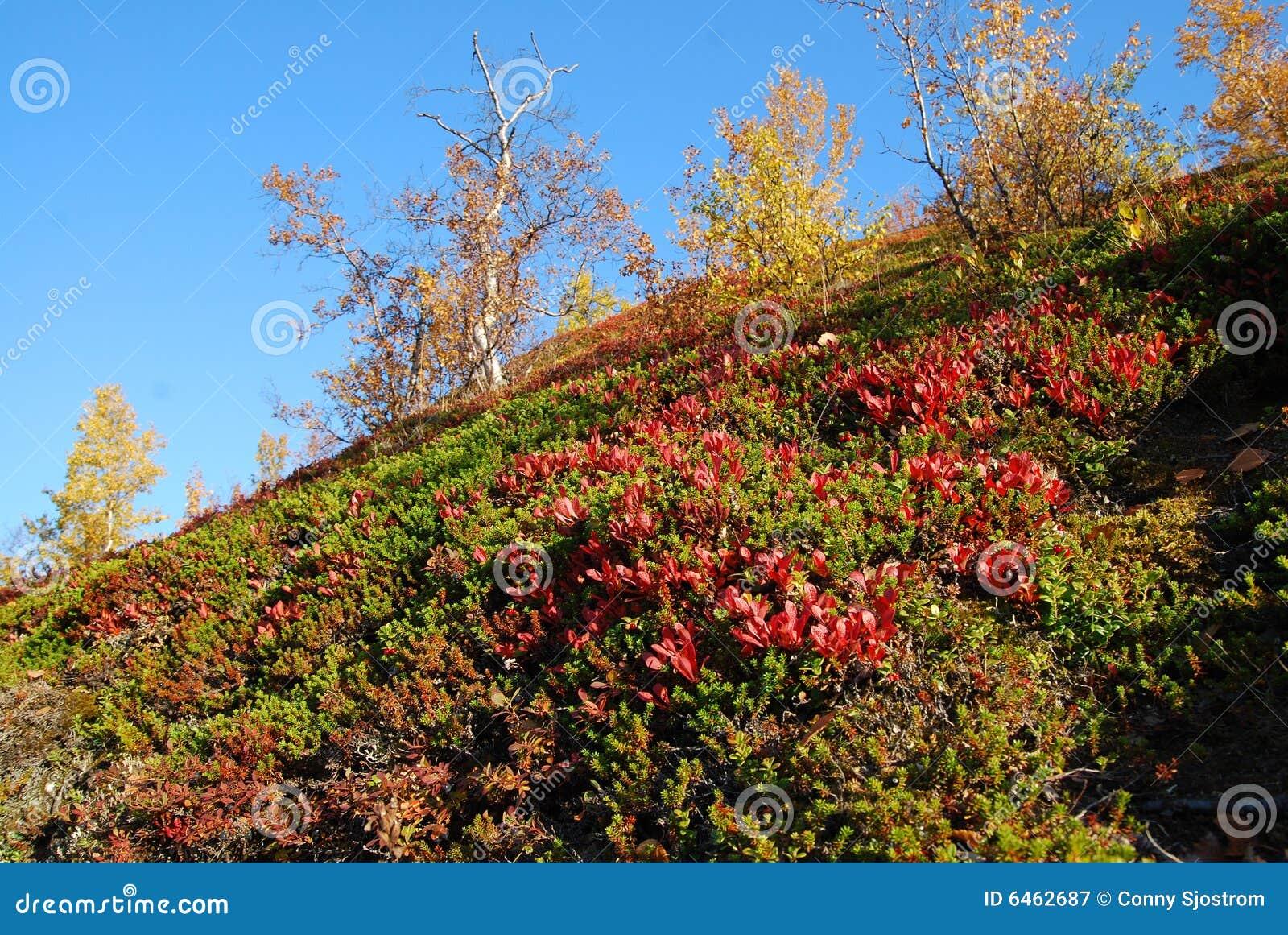 Autumn kolorowe krajobrazu
