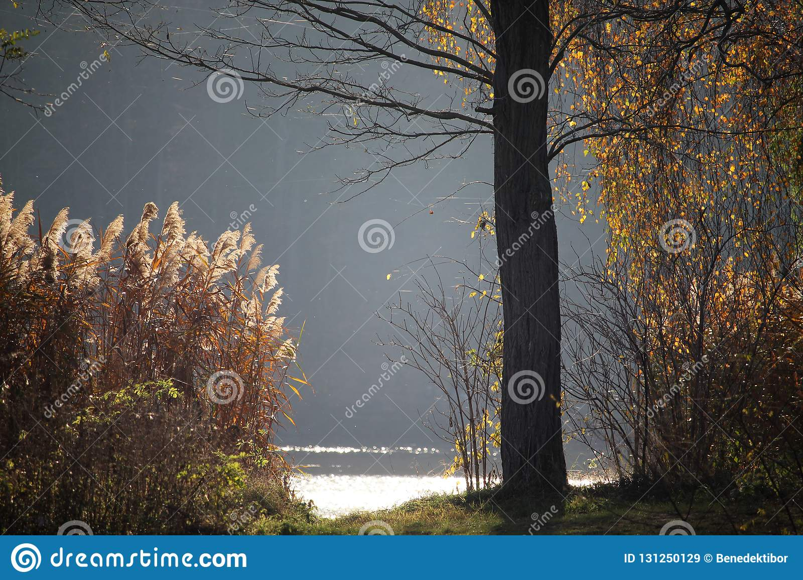 Autumn lake shoreline with forest in the background