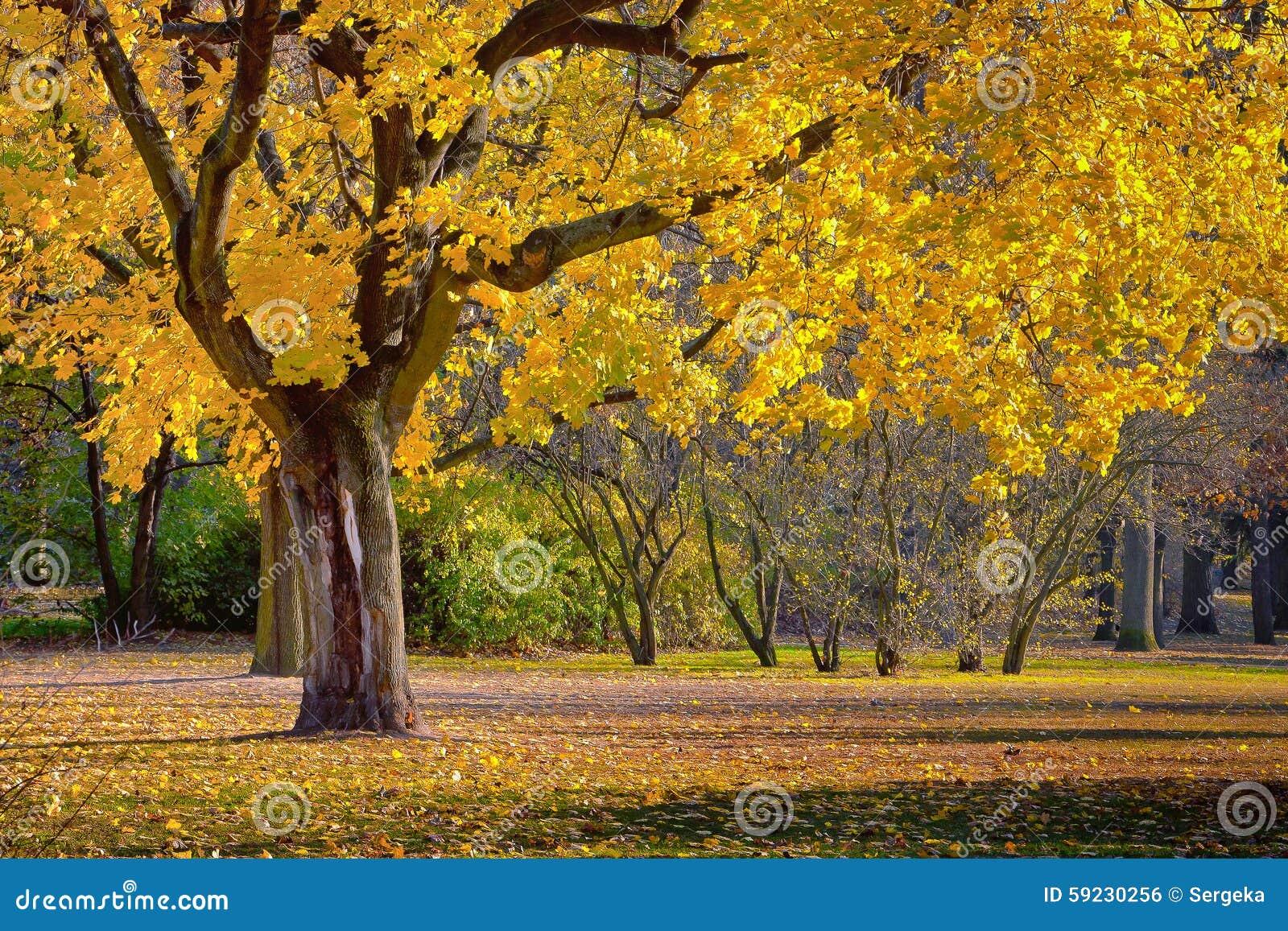 Download Autumn Landscape foto de archivo. Imagen de travieso - 59230256