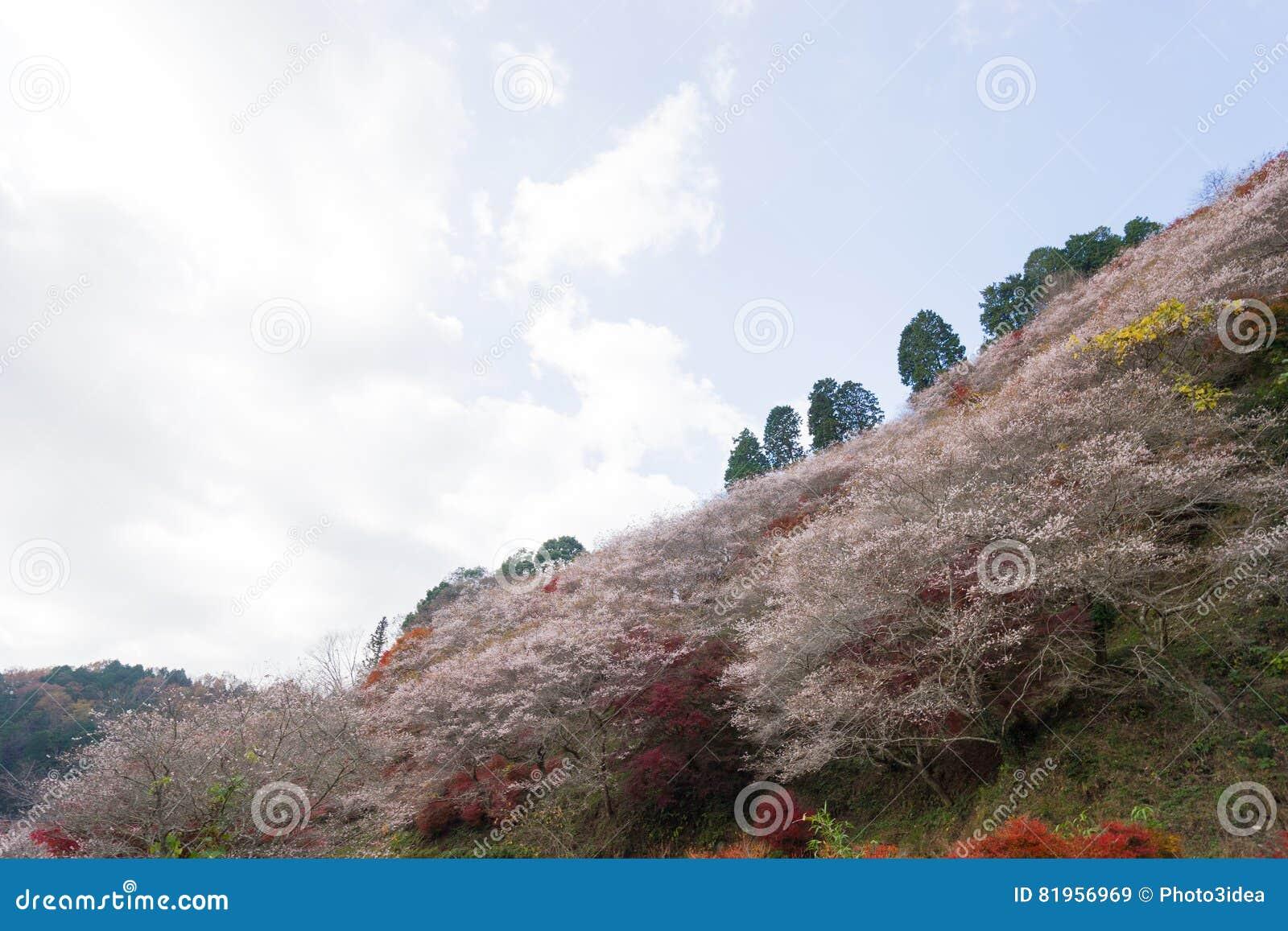 Autumn landscape background Red leave in Obara Nagoya Japan