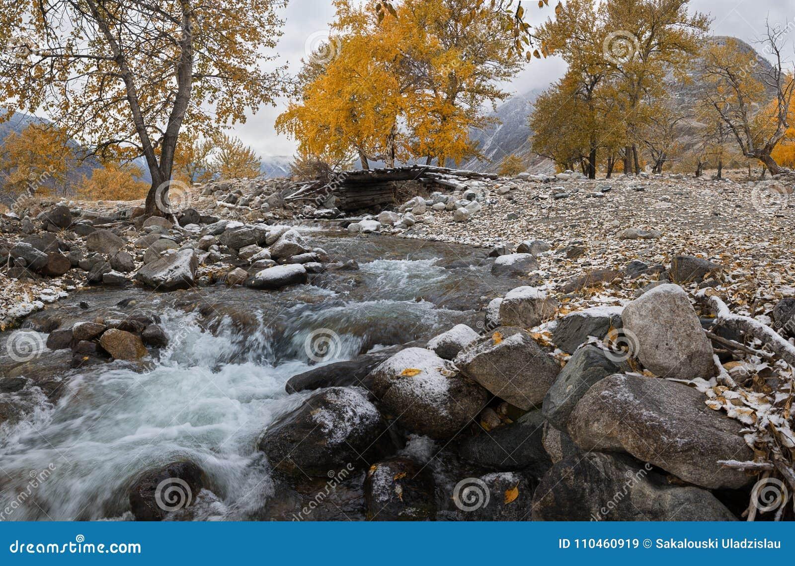 Autumn Landscape With Birches With guld- gul lövverk och förkylningliten vik Autumn Mountain Landscape With River björk och gamla